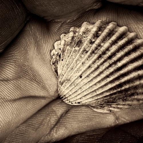 A shell in a hand of time a galleria open edition matt yigde3