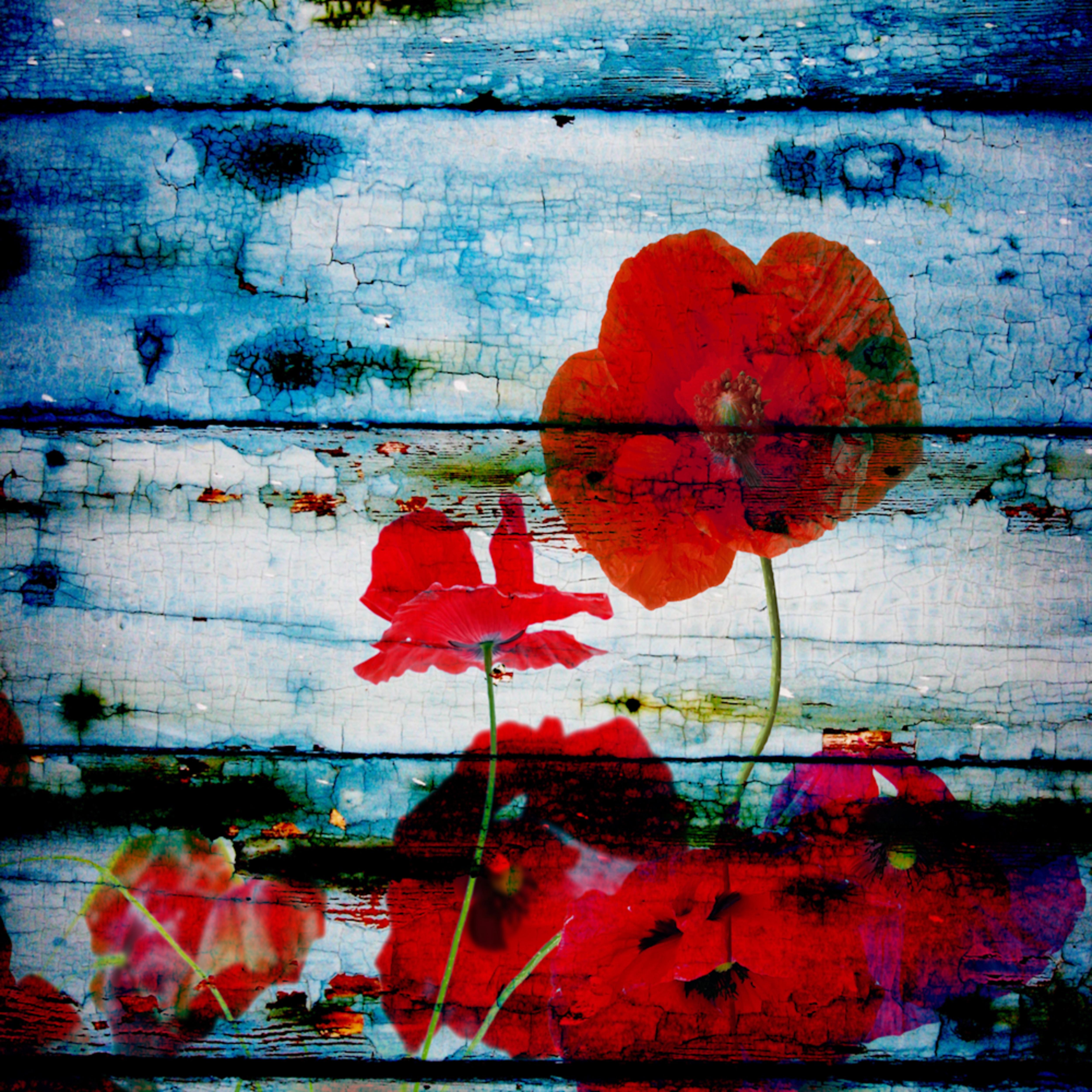 Orl 1092 poppies on blue i gr7fjm