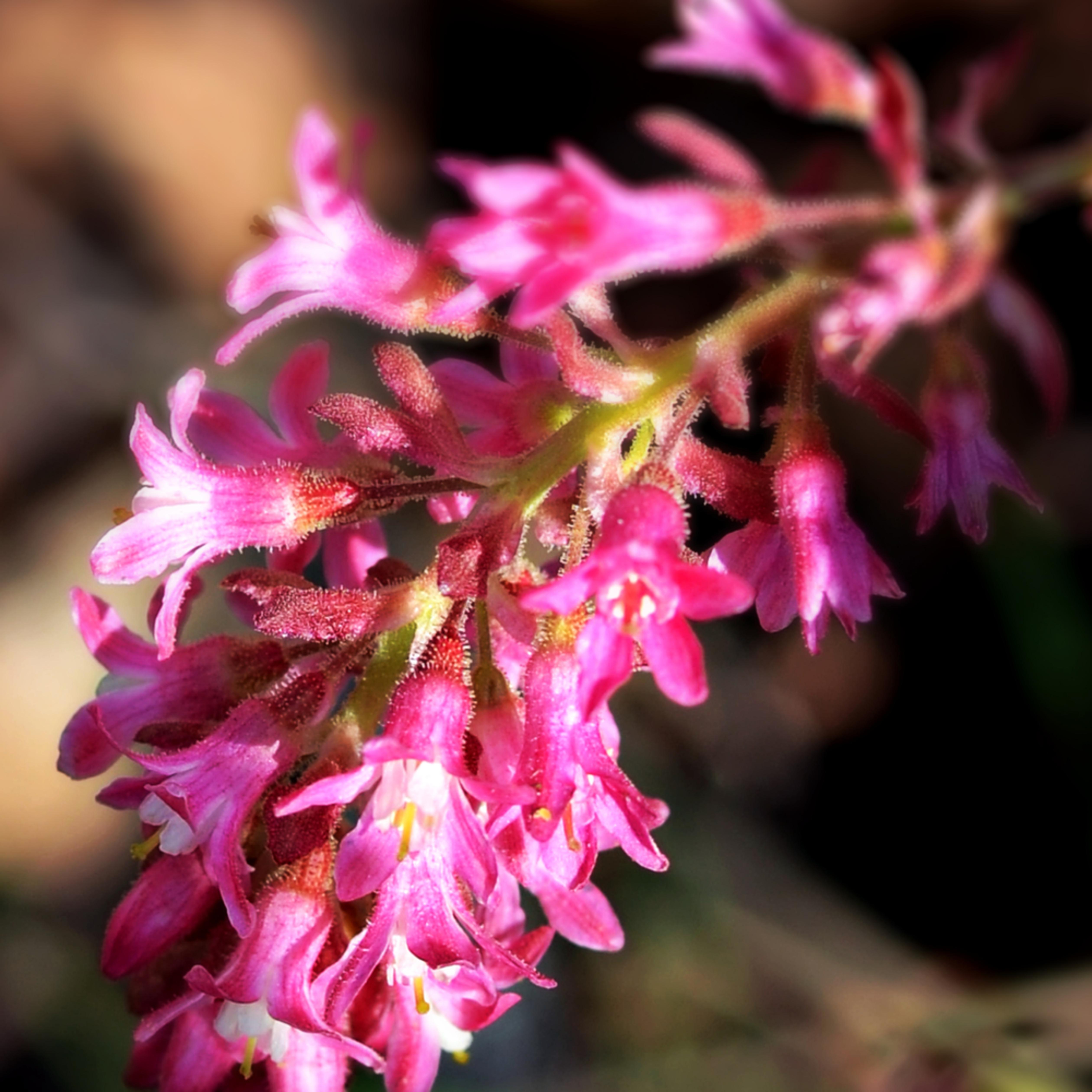 Wild flower in pink jwe7dp