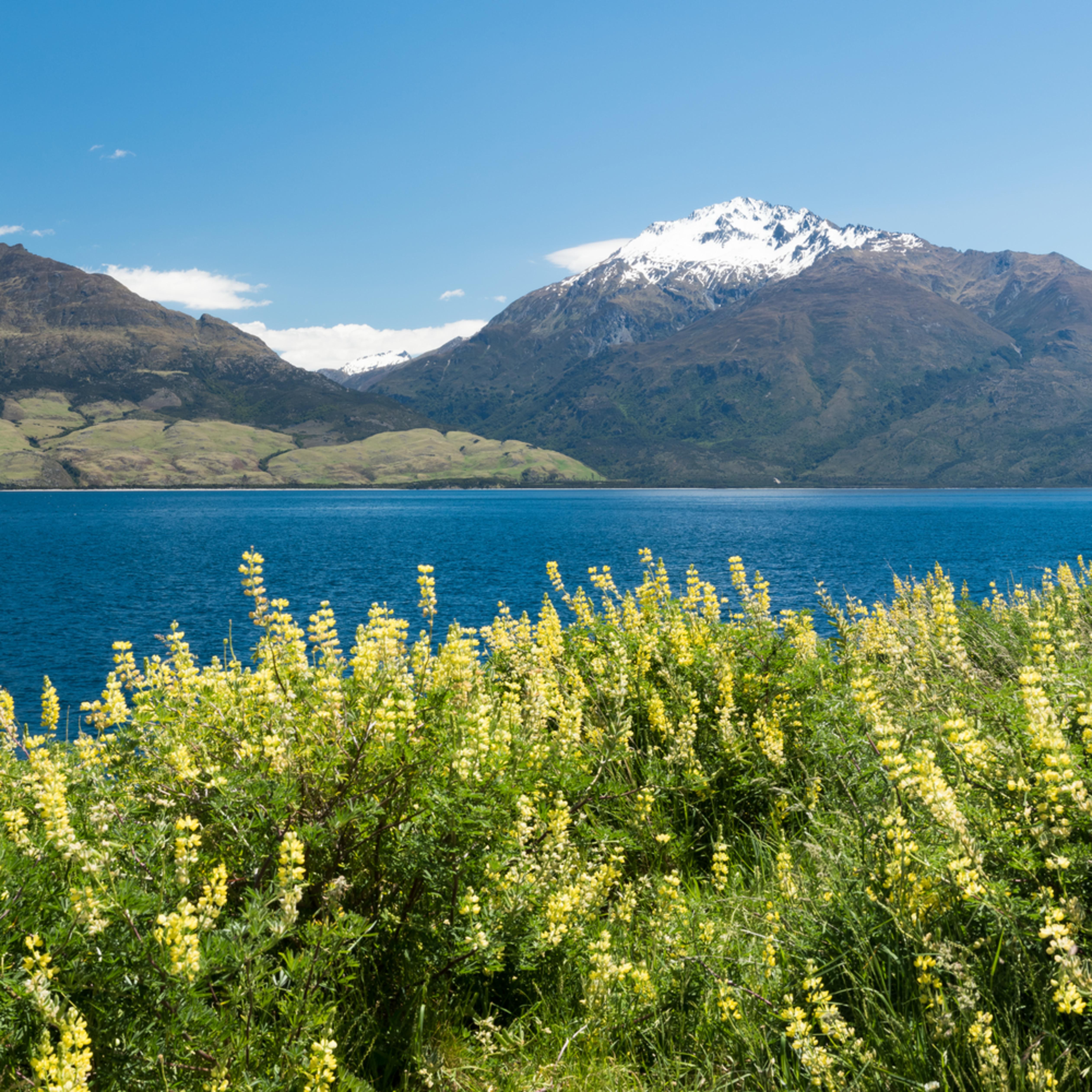 Lake wanaka panorama vdxxtt