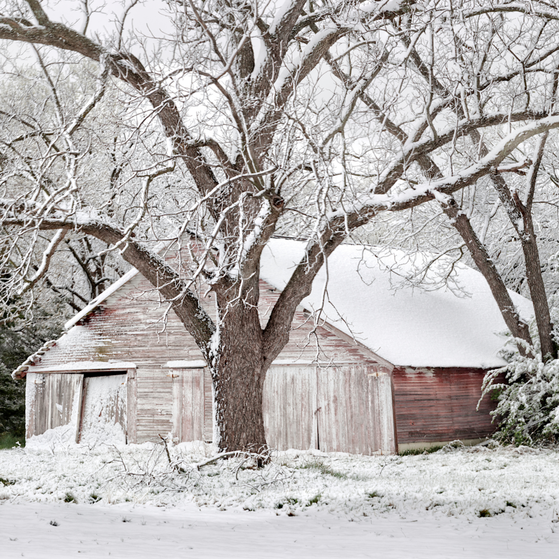 Q 001 spring snow   color 50x21 ye9bp3
