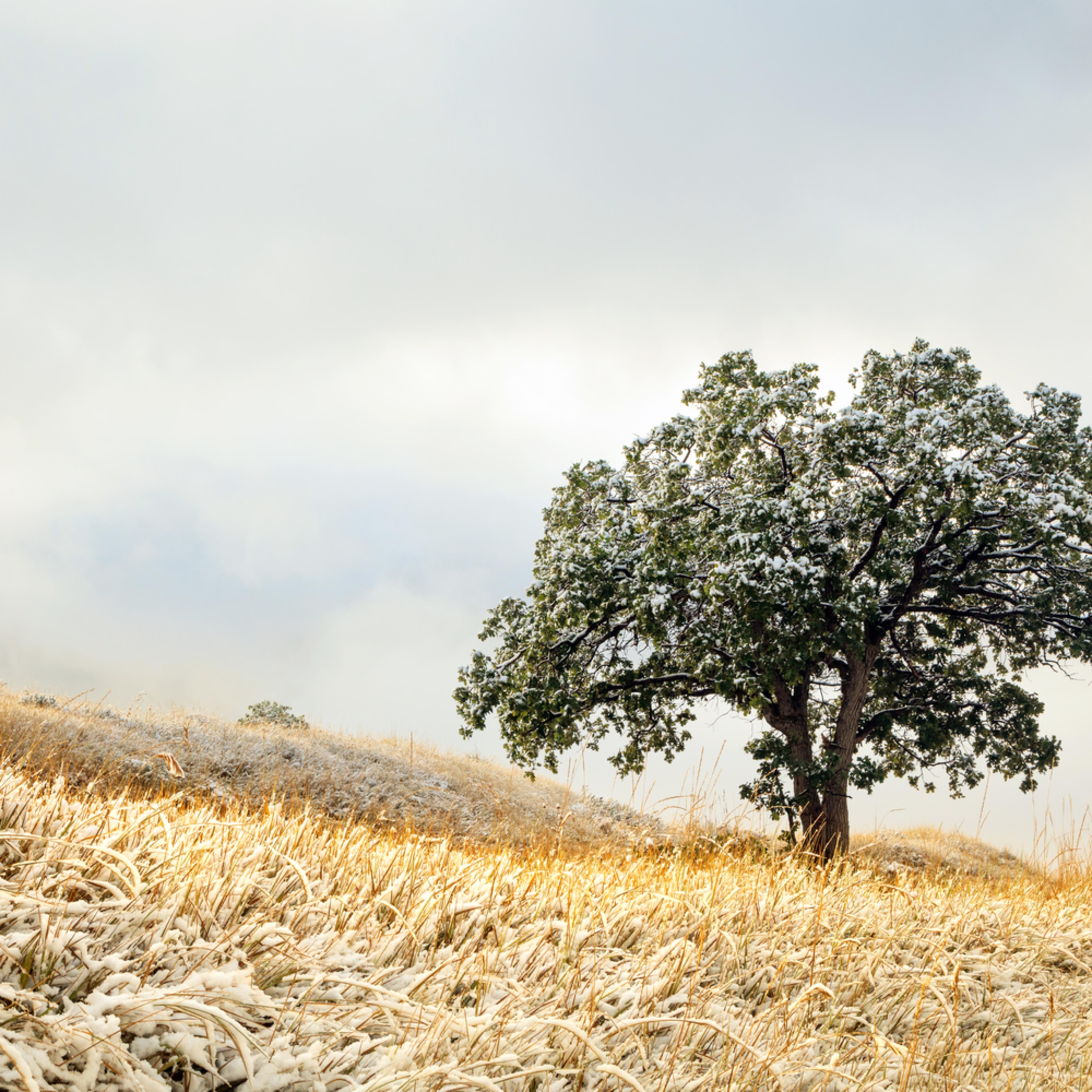Lone wasatch oak kqzjsv