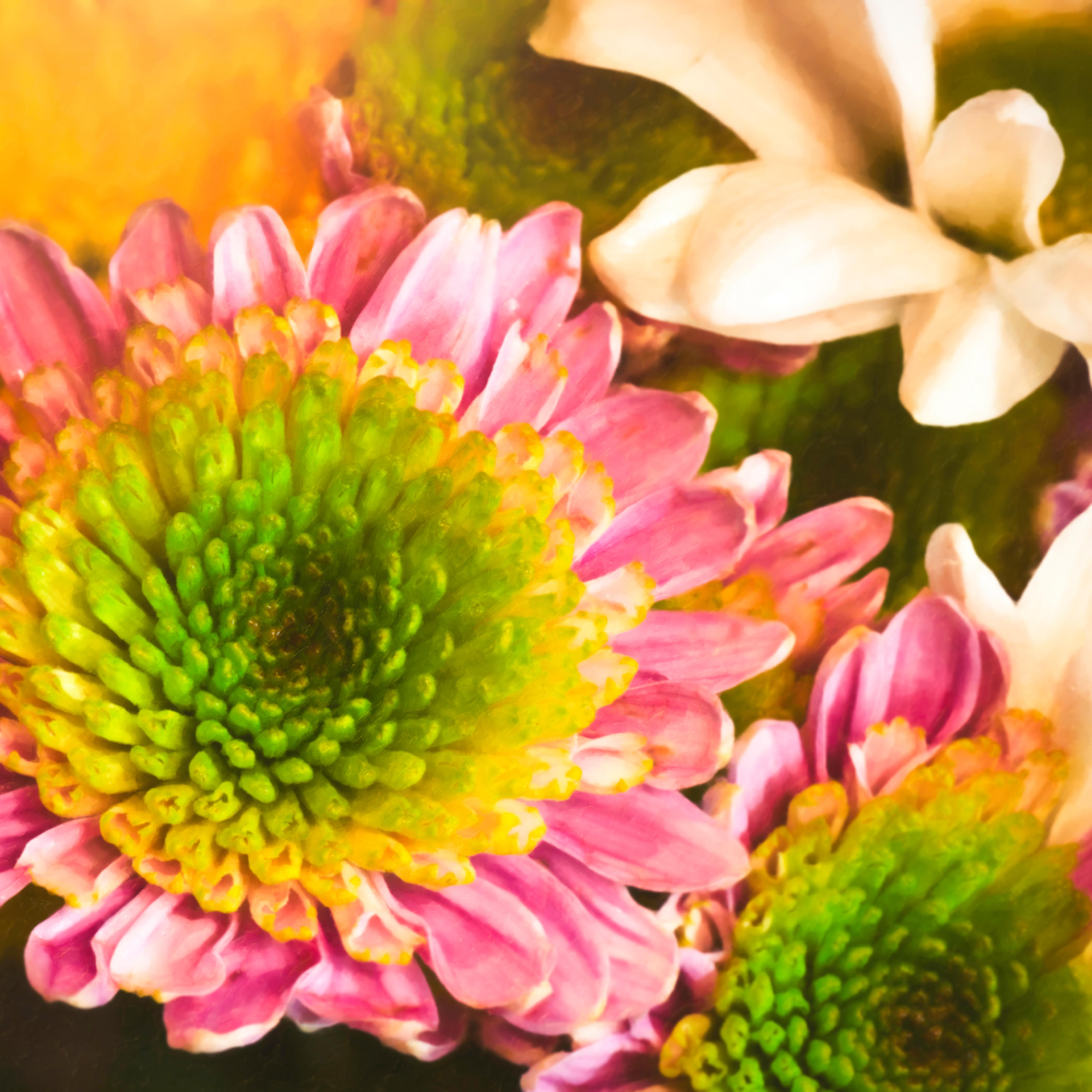 Macro flowers 014 edit lyltl5