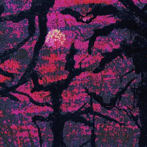 Forest of the night uuplsu