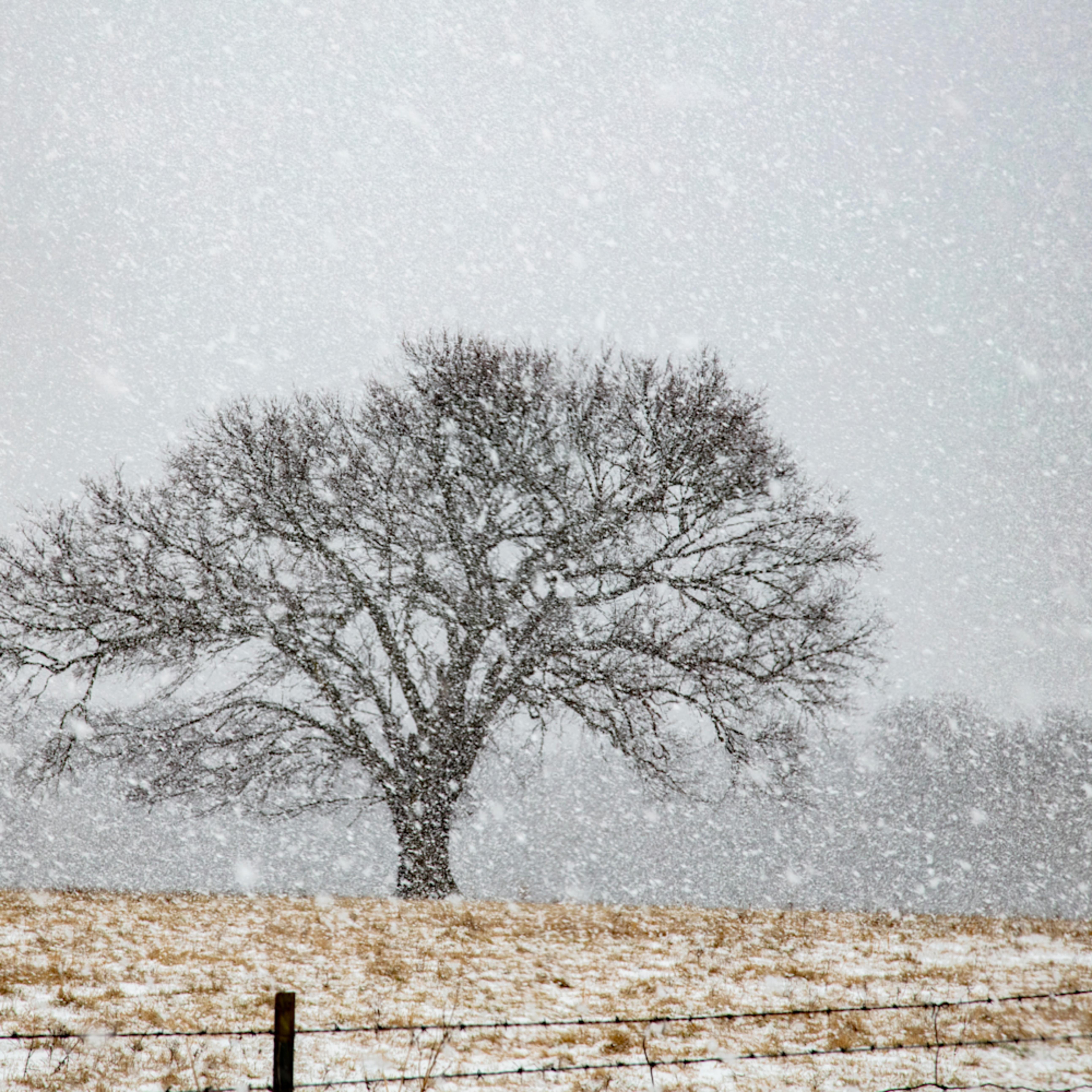 Hard snow trees 4533 snow 20 fss bfvbjj