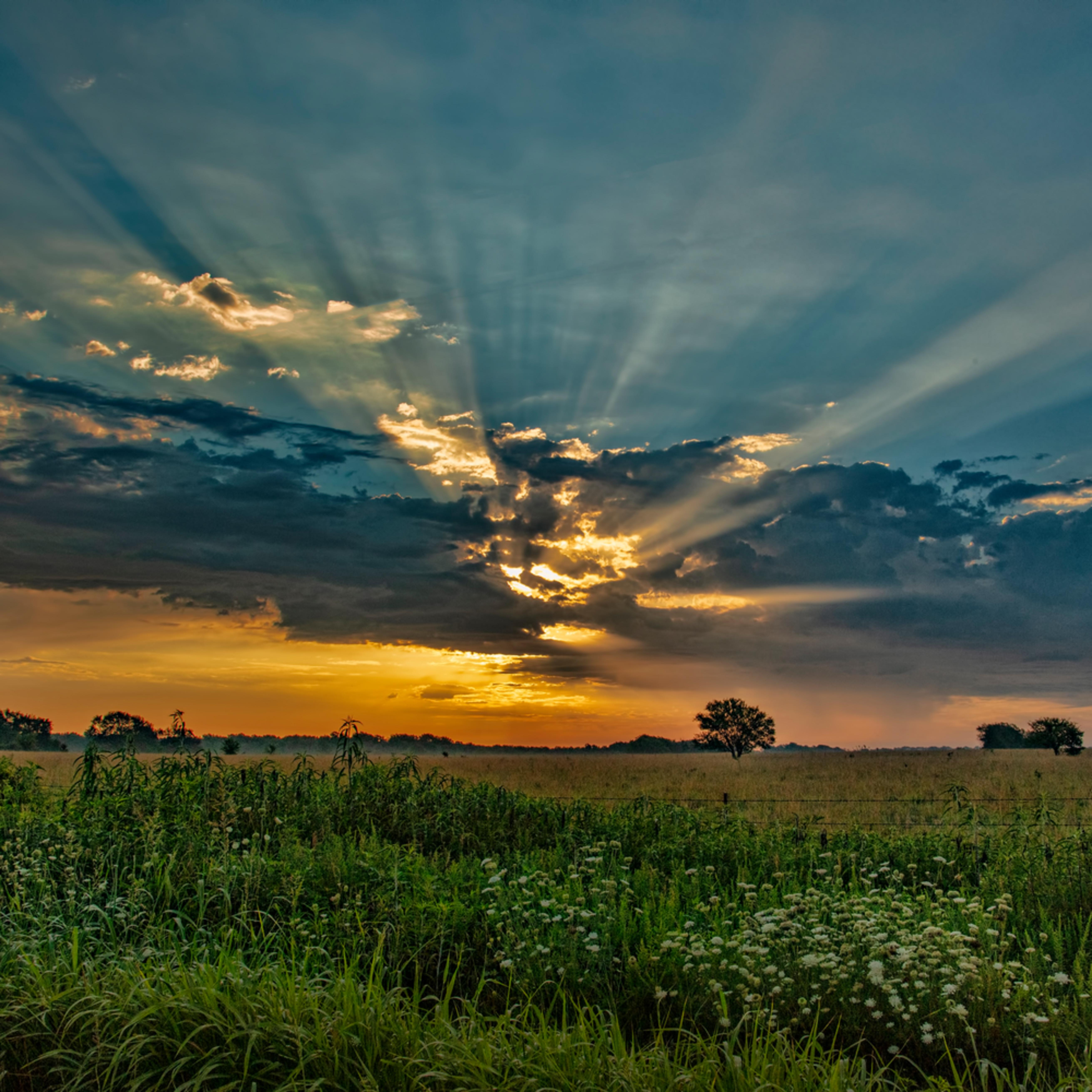 Sunrise sunrays wildflowers 7471 cfq00j