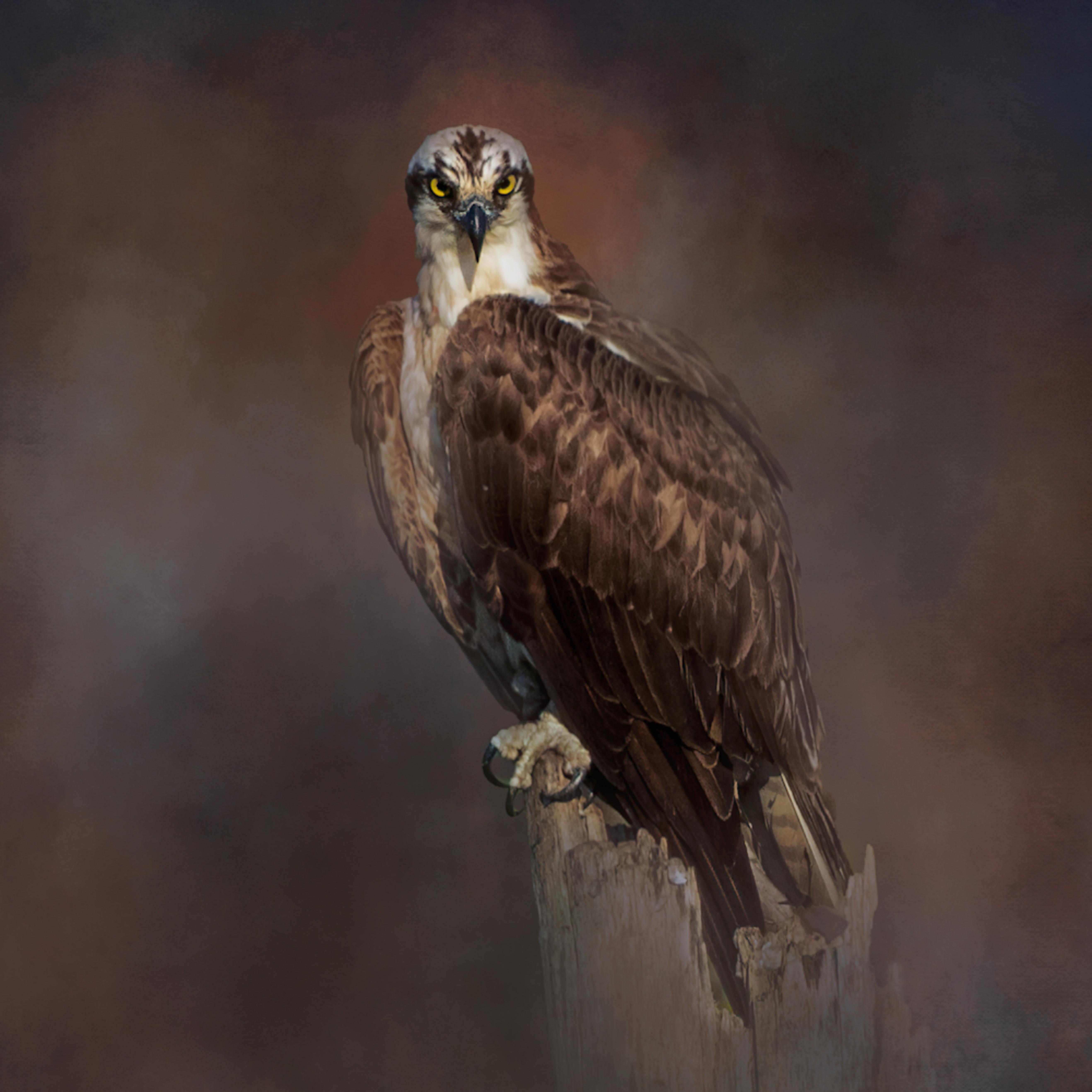Osprey eyes s72sdx