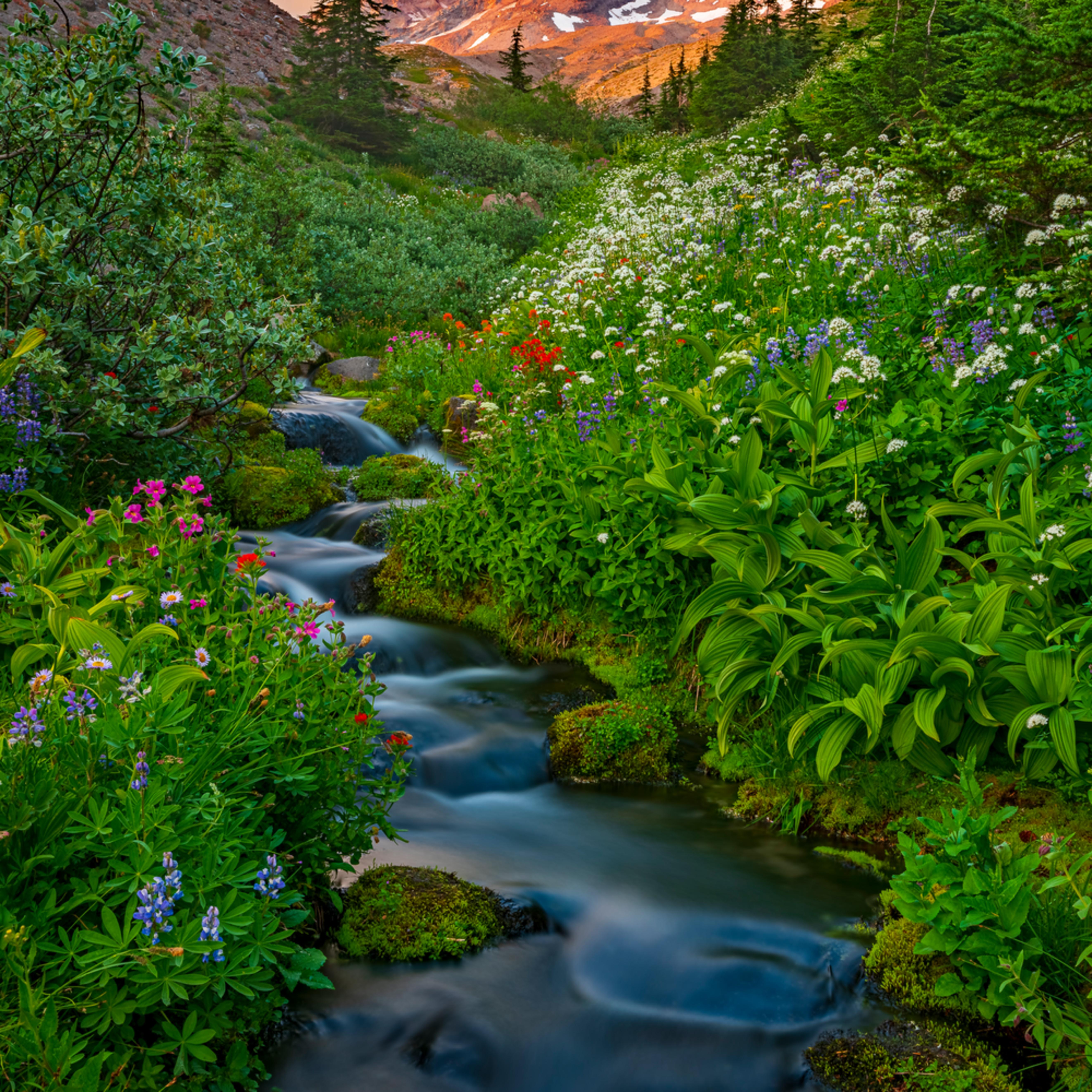 Flowing paradise rprtzv