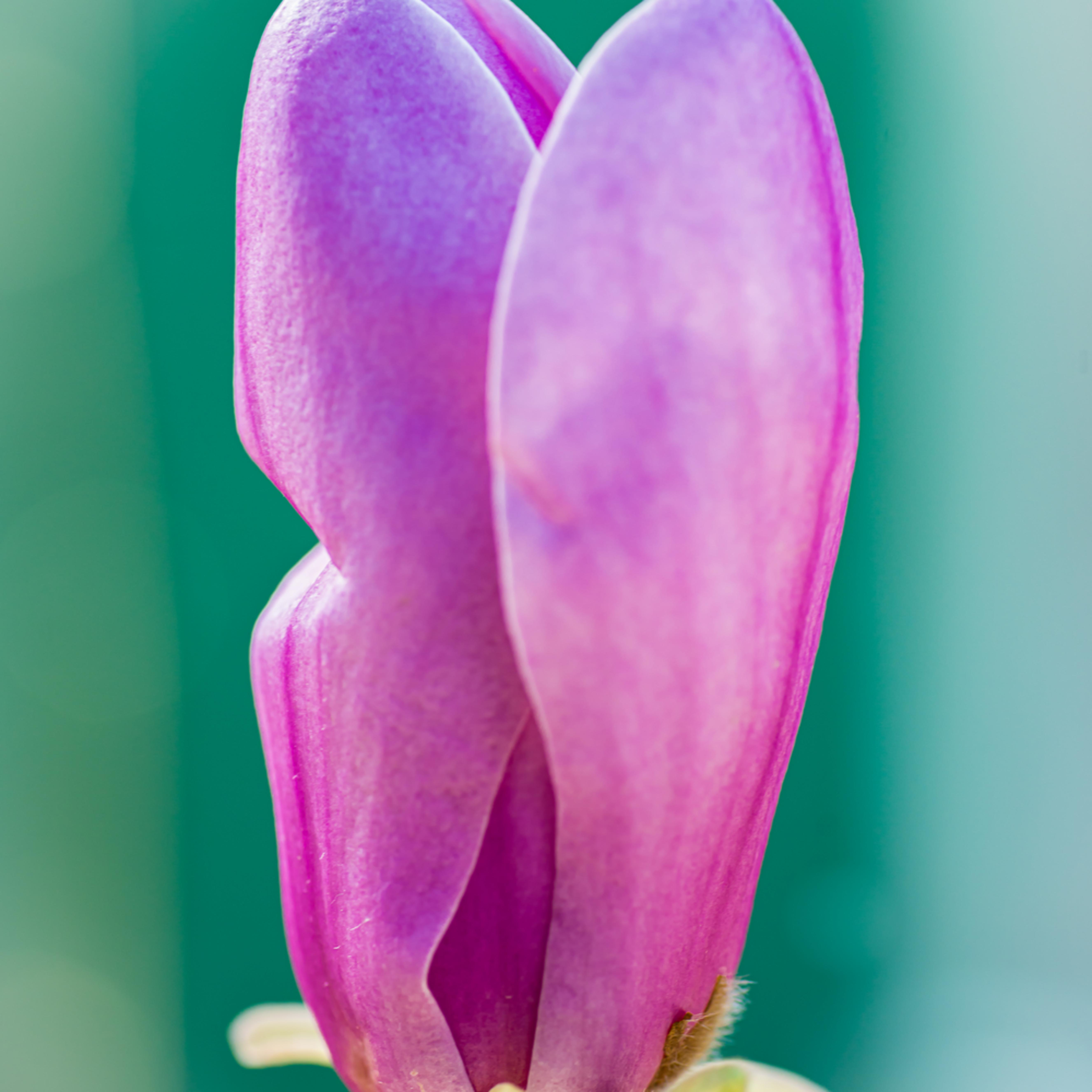 2017 april flowers55 gfweww