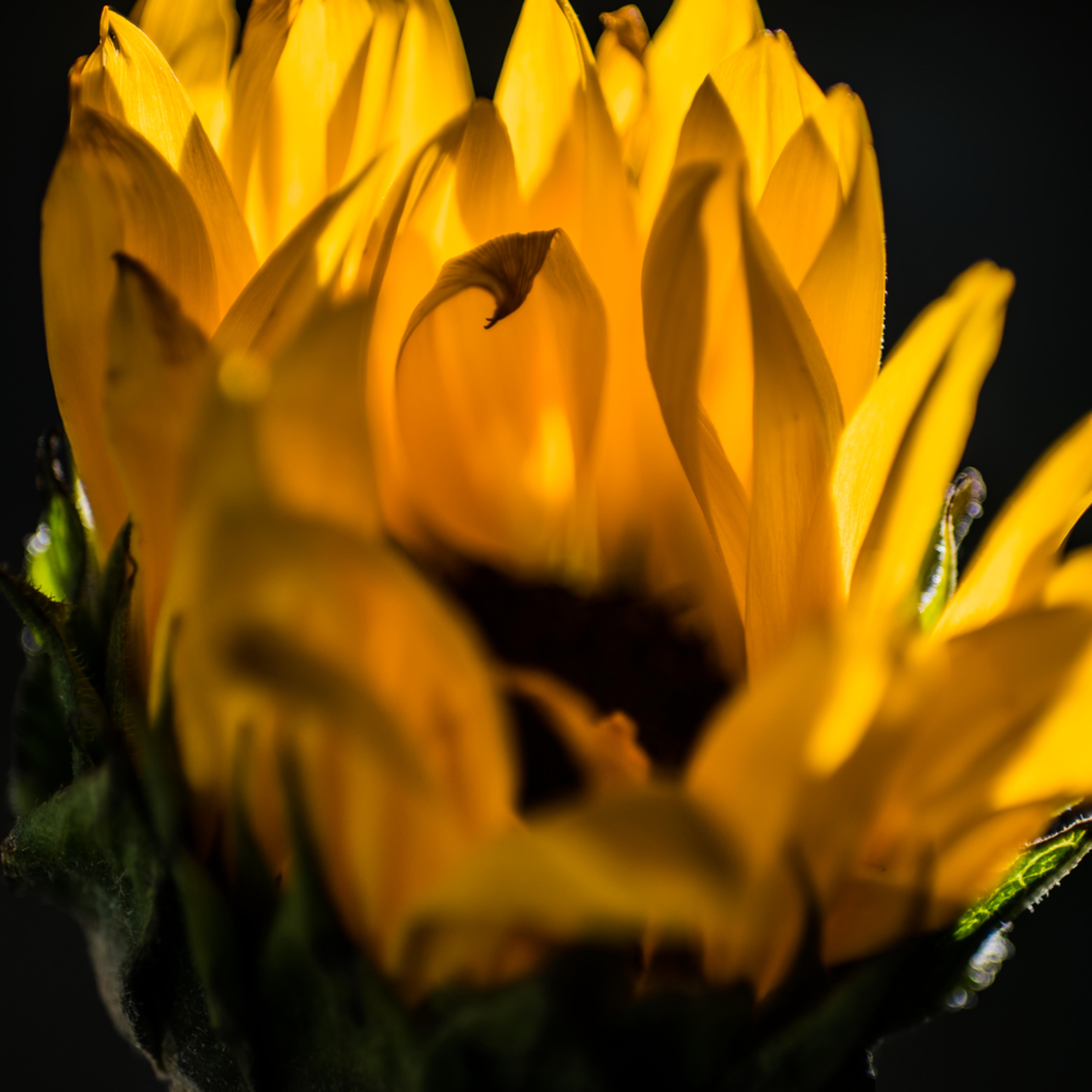 2017 february flowers14 gapuu1