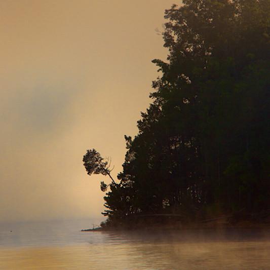 Treefog kylakebarkley8623srgb koralmartin jouube