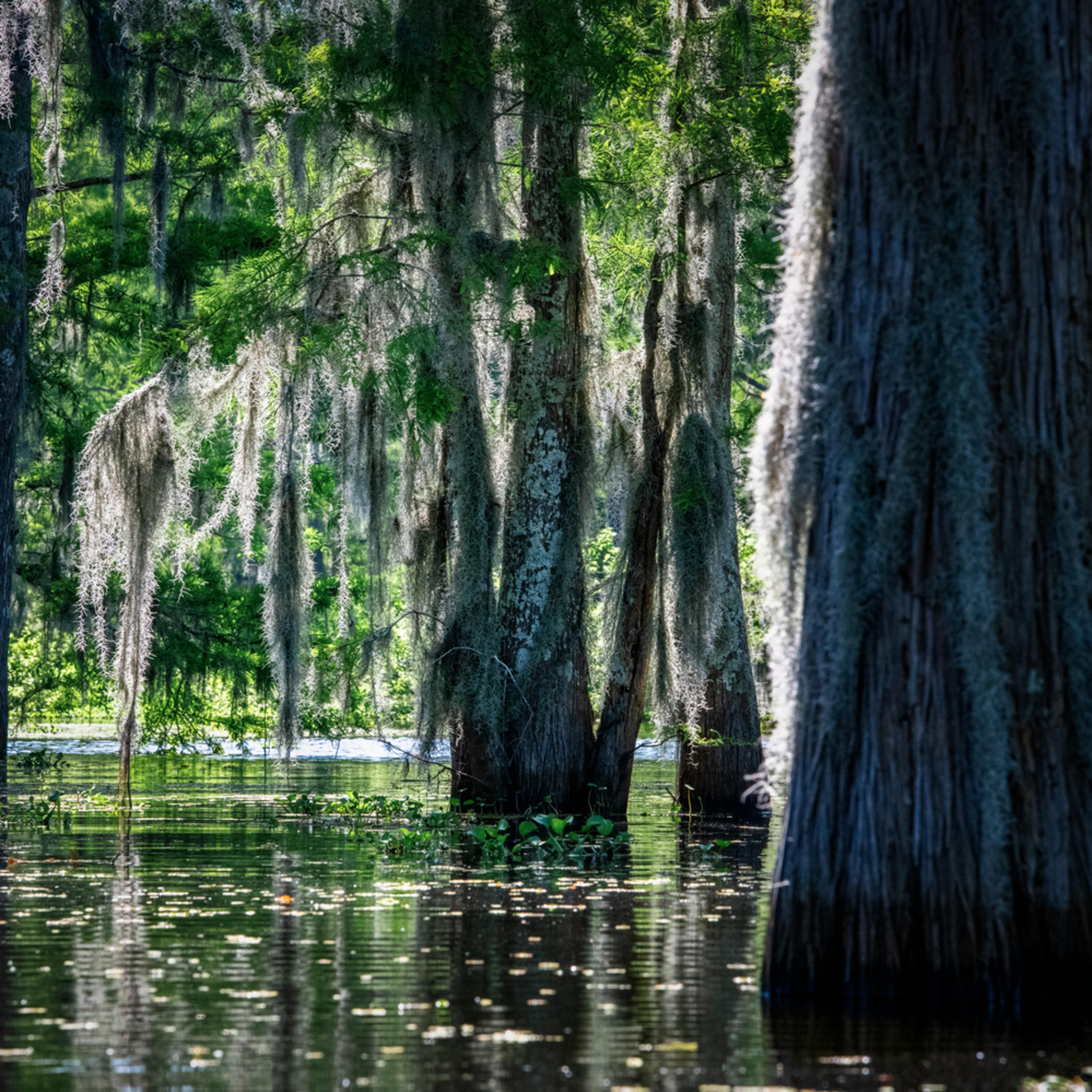 Andy crawford photography henderson swamp bayou beauty ak76v9