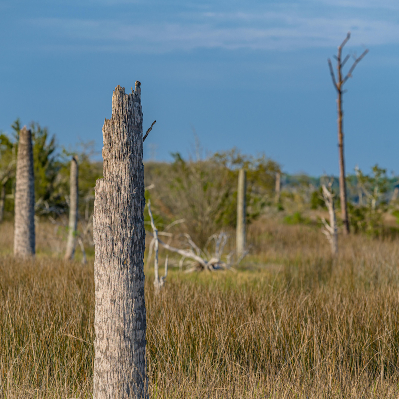Castaway island preserve 2623 jtntwb