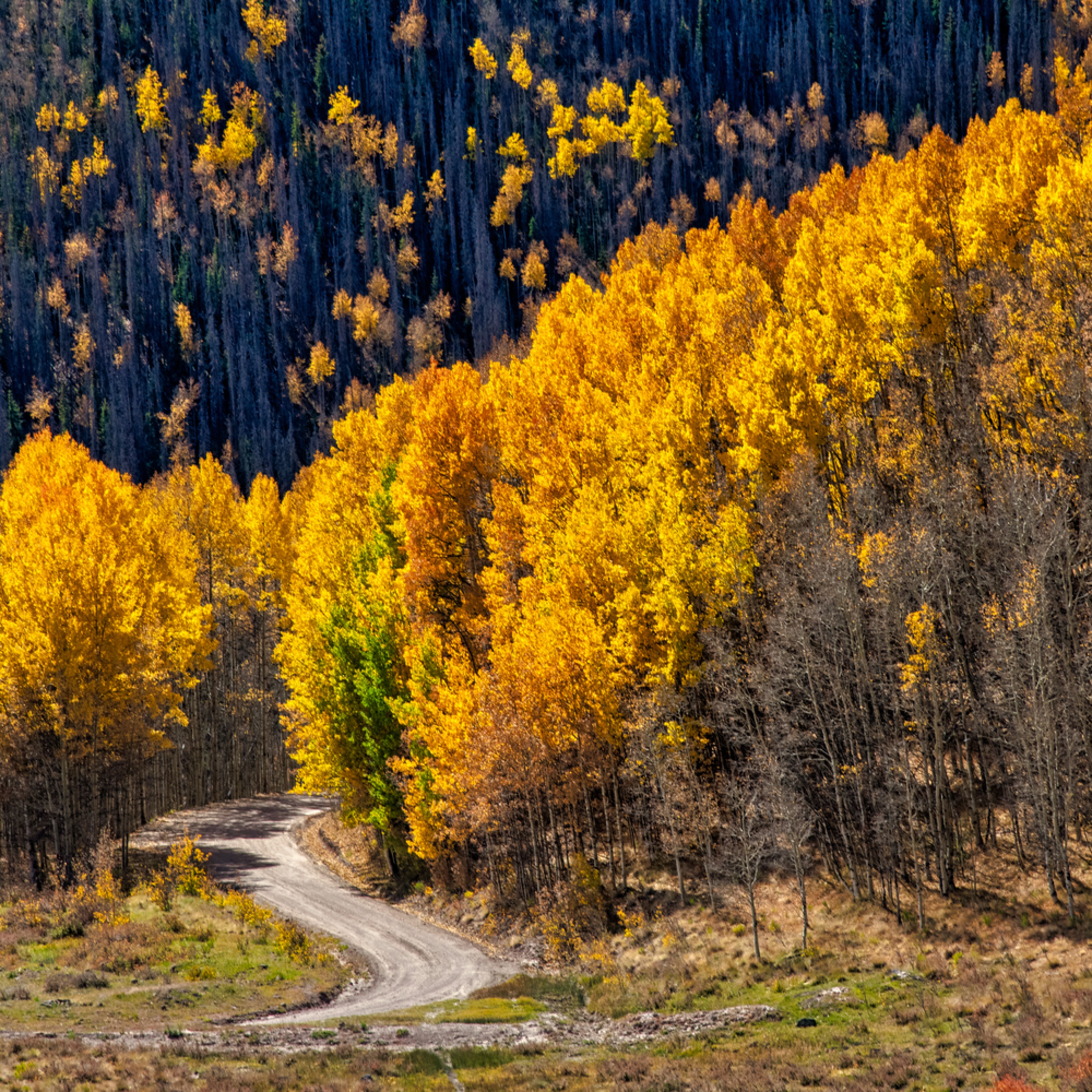 Andy crawford photography colorado aspens 6 liljsf