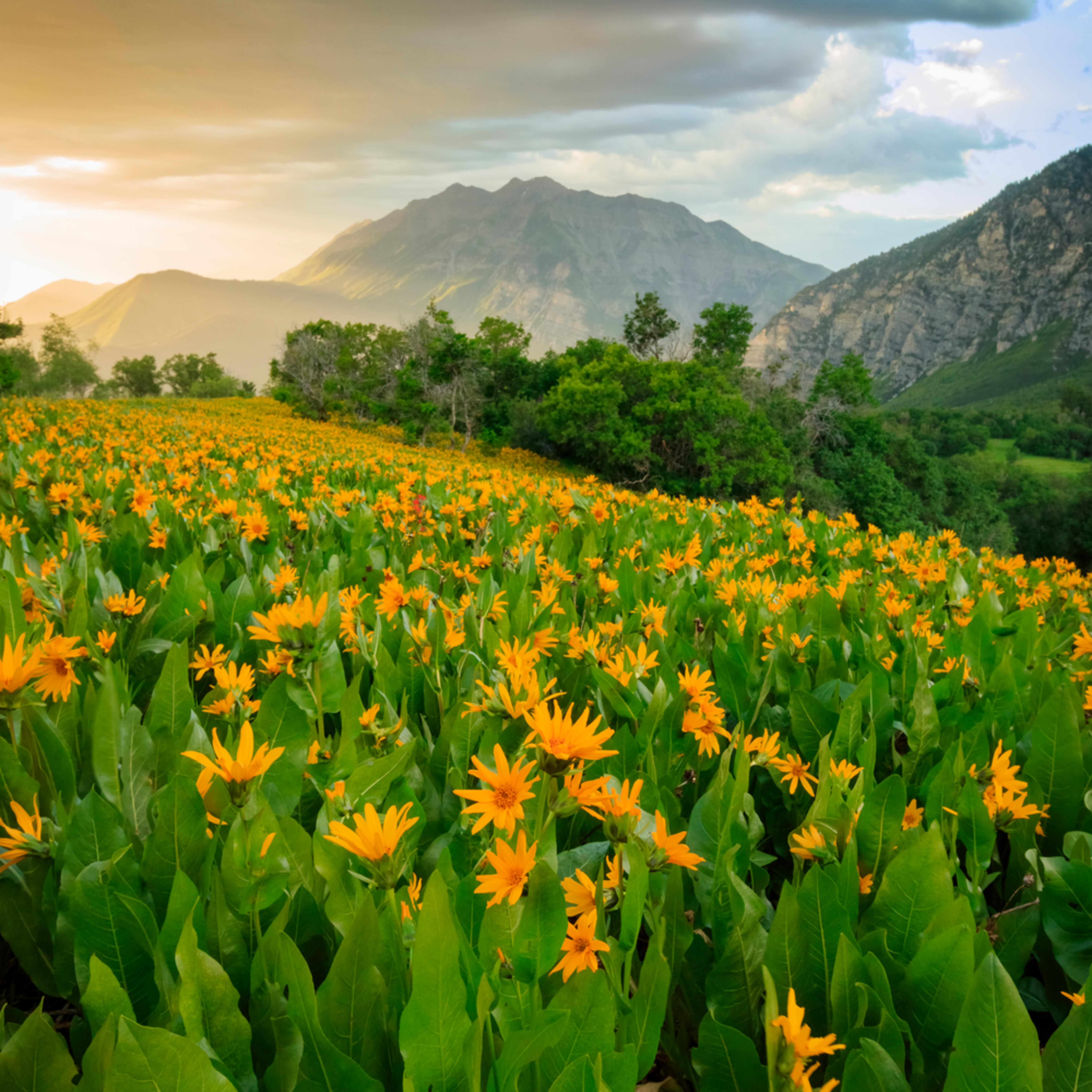 Summer wildflowers vertical pqiltk