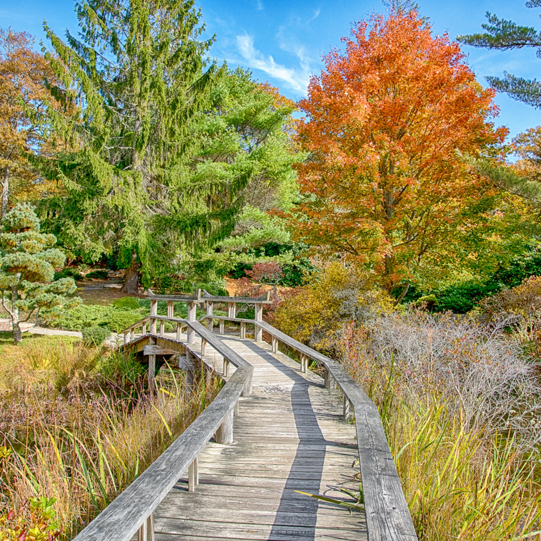 Mytoi fall walkway qqb9xk