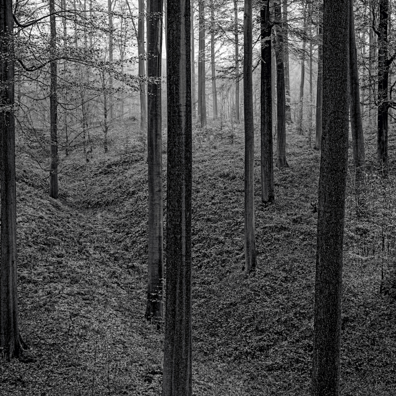 Sonian forest no 21 belgium 2019 bjrlsh