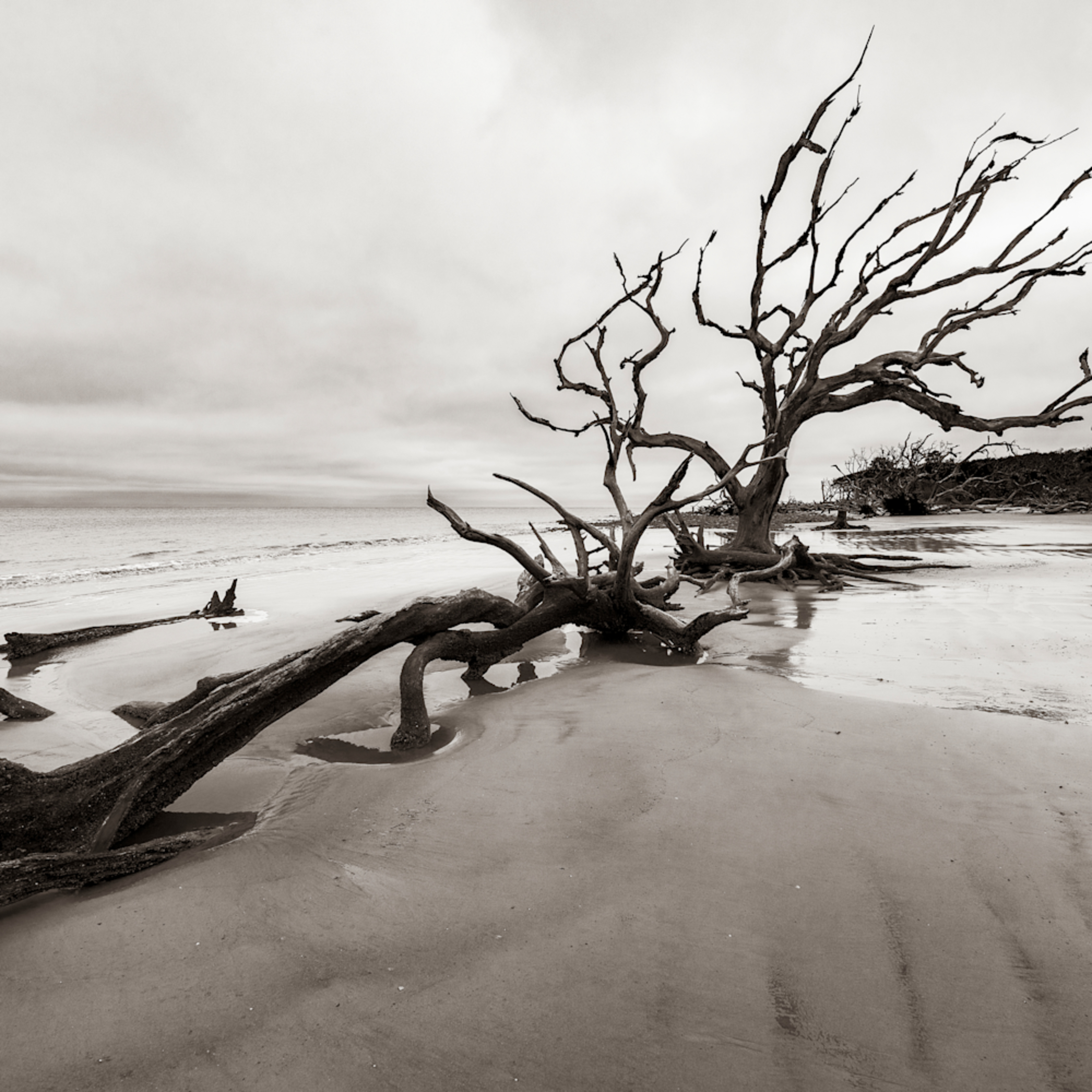 Andy crawford photography jekyll island boneyard ut3qhj