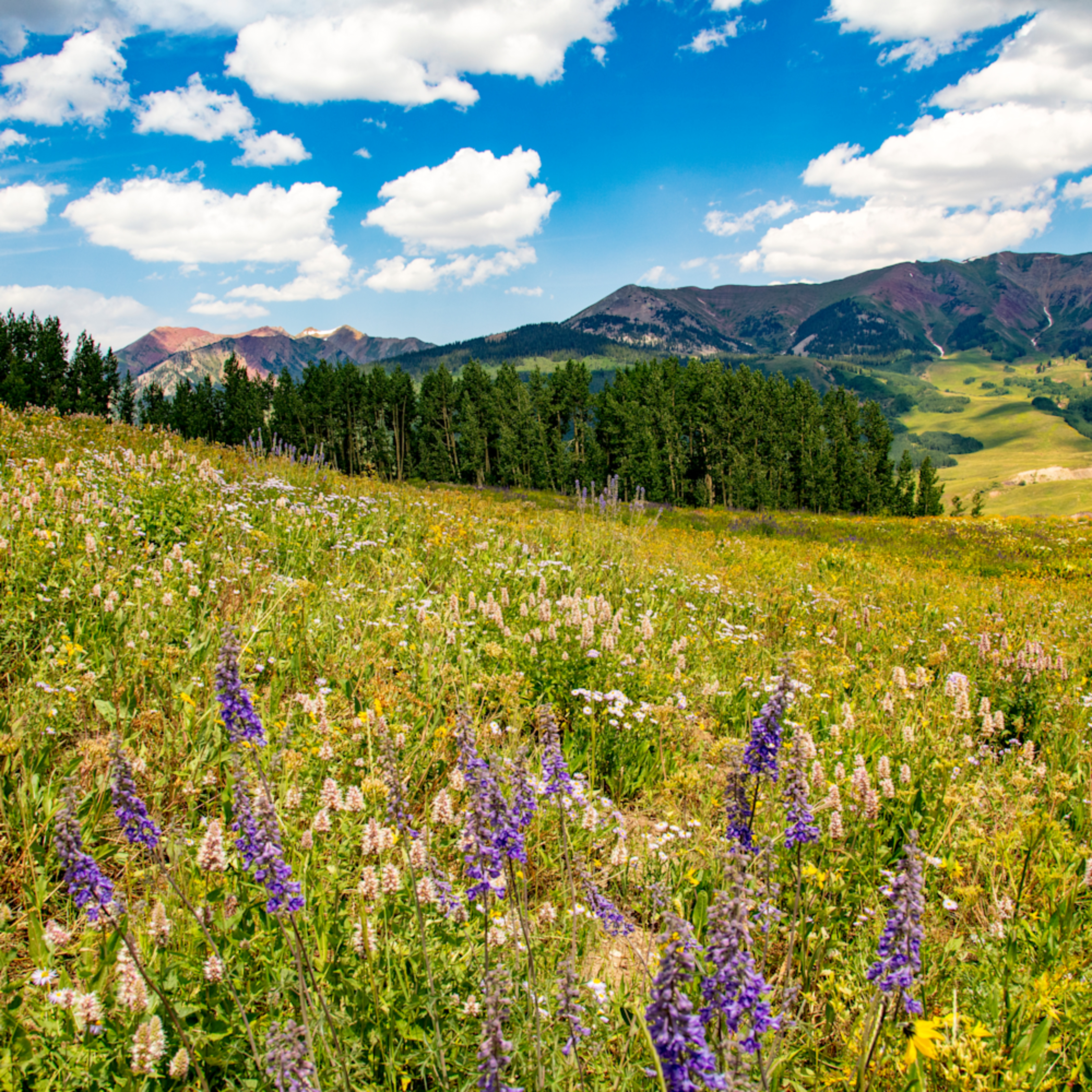 Snodgrass trail flowers mountains 7111fs lm6wtb