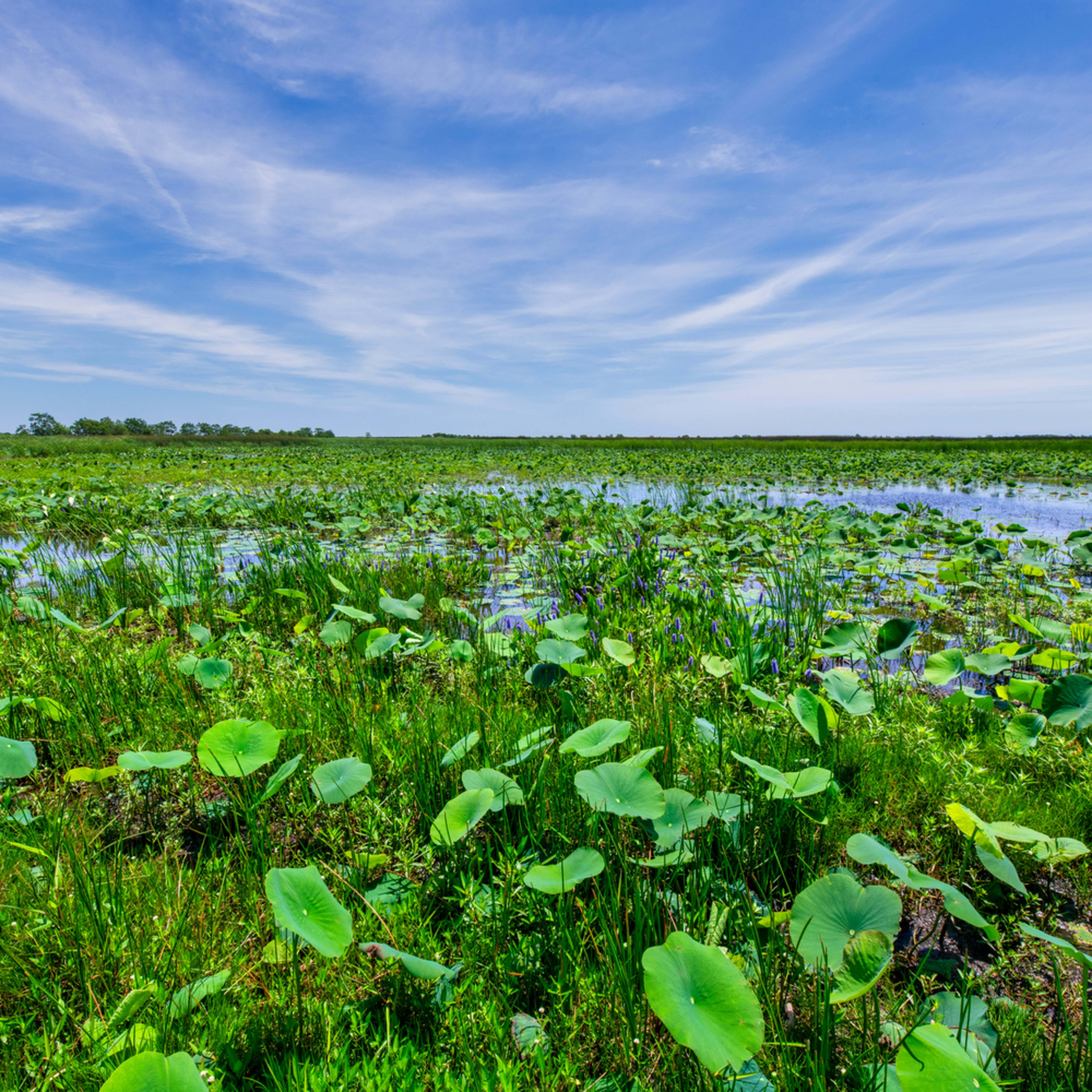 Andy crawford photography view of cameron prairie 1 n5a3jr
