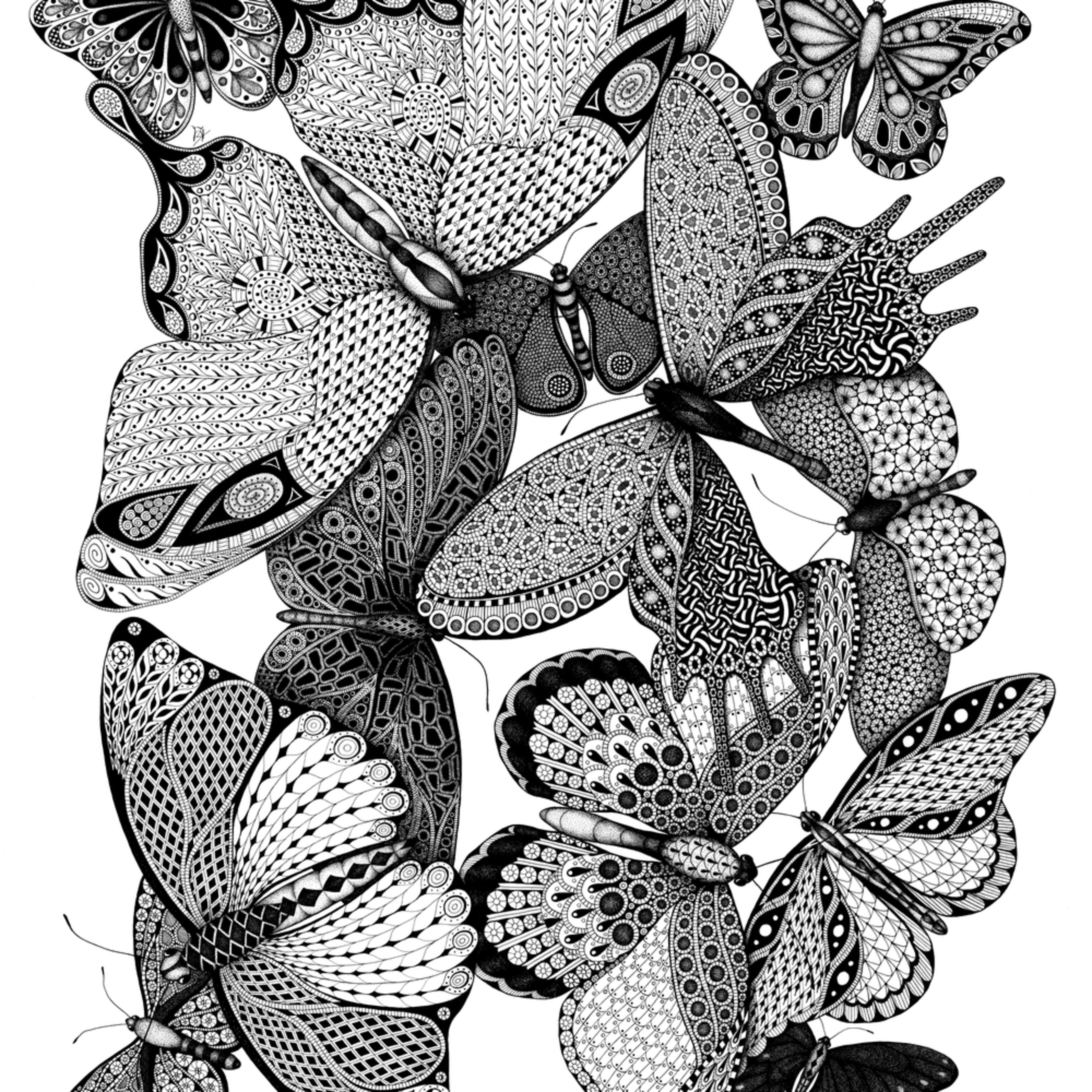 Melange des papillons vrltf0