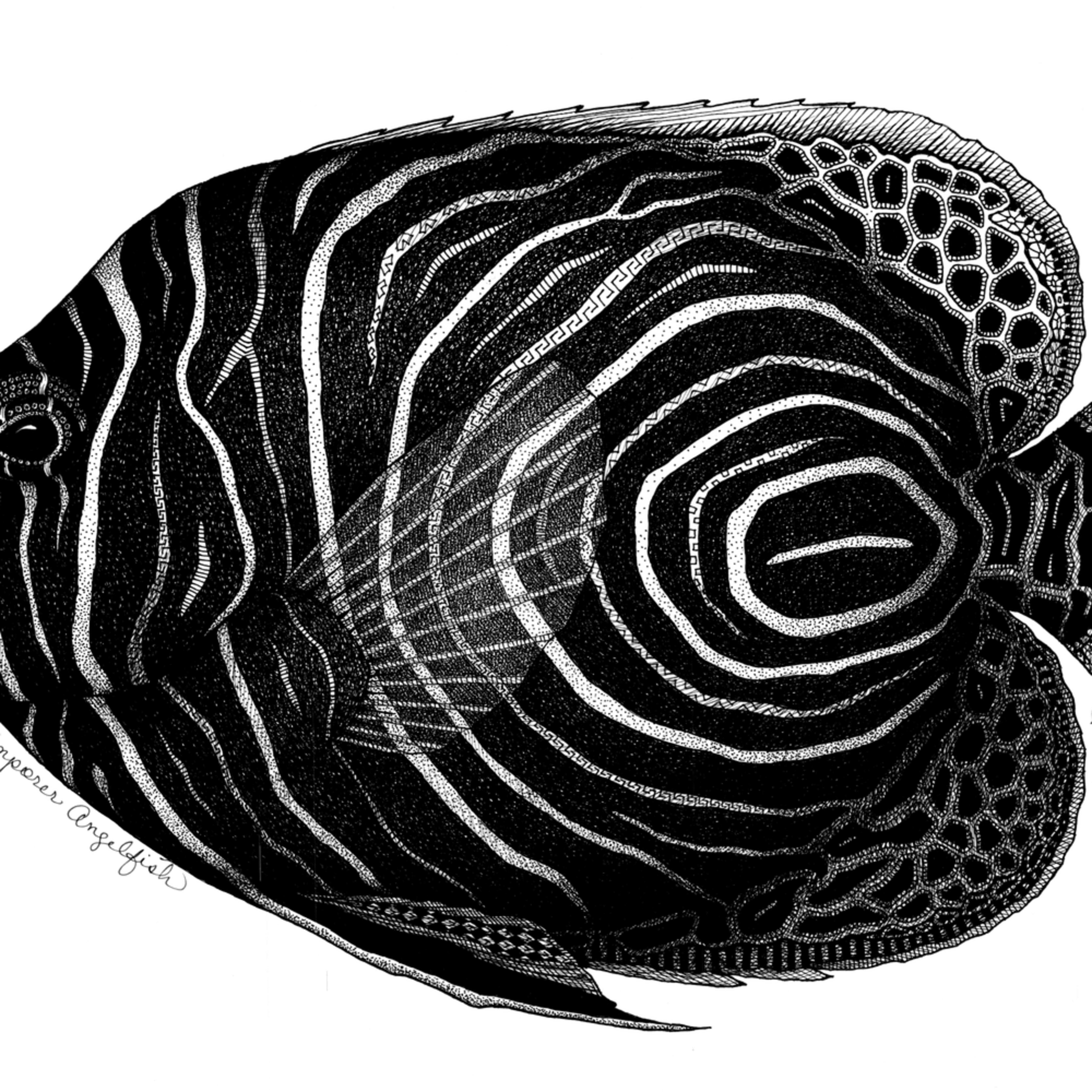 Emporer angelfish mmludf
