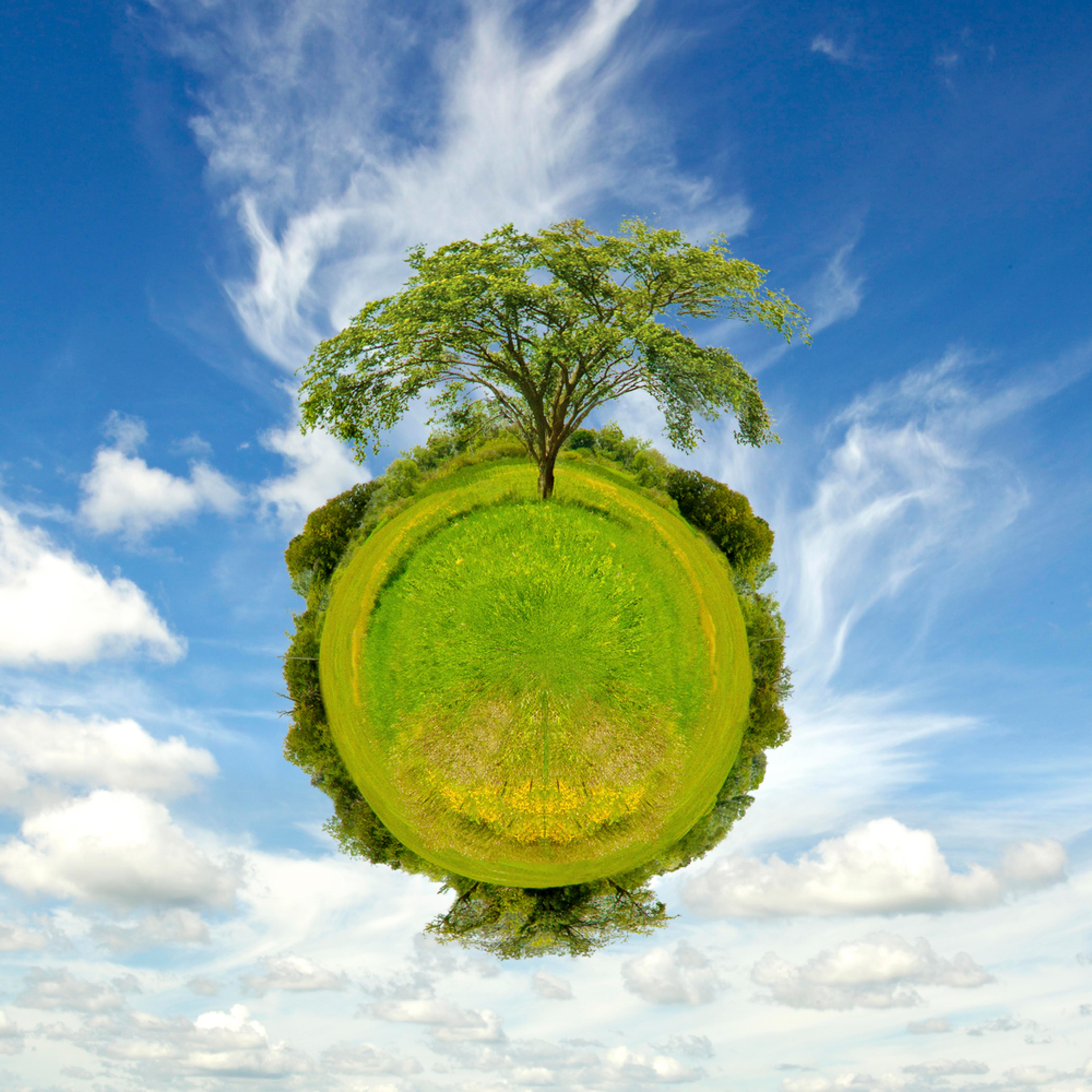 Treeplanet asf  vioktr