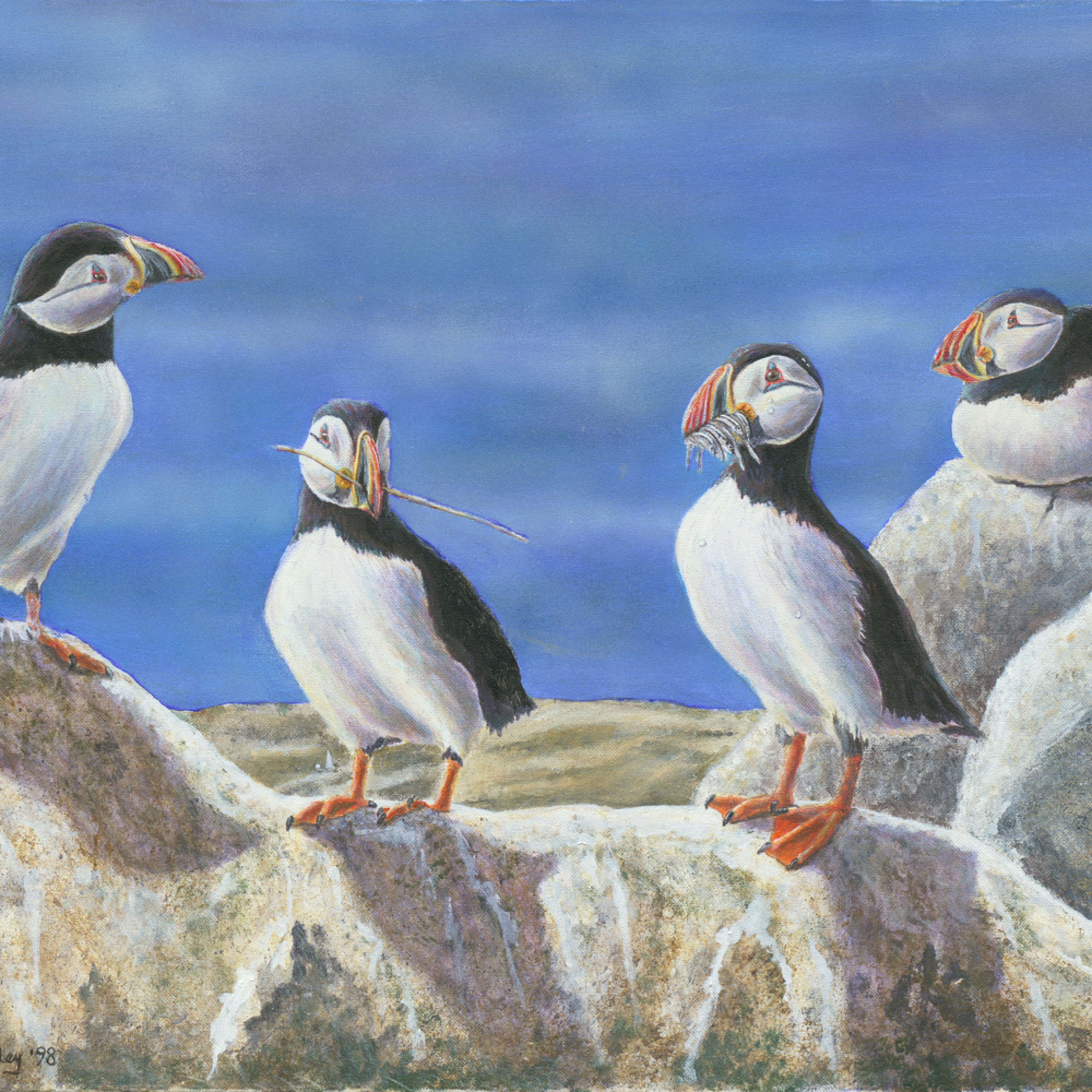 Puffins  large lshosq