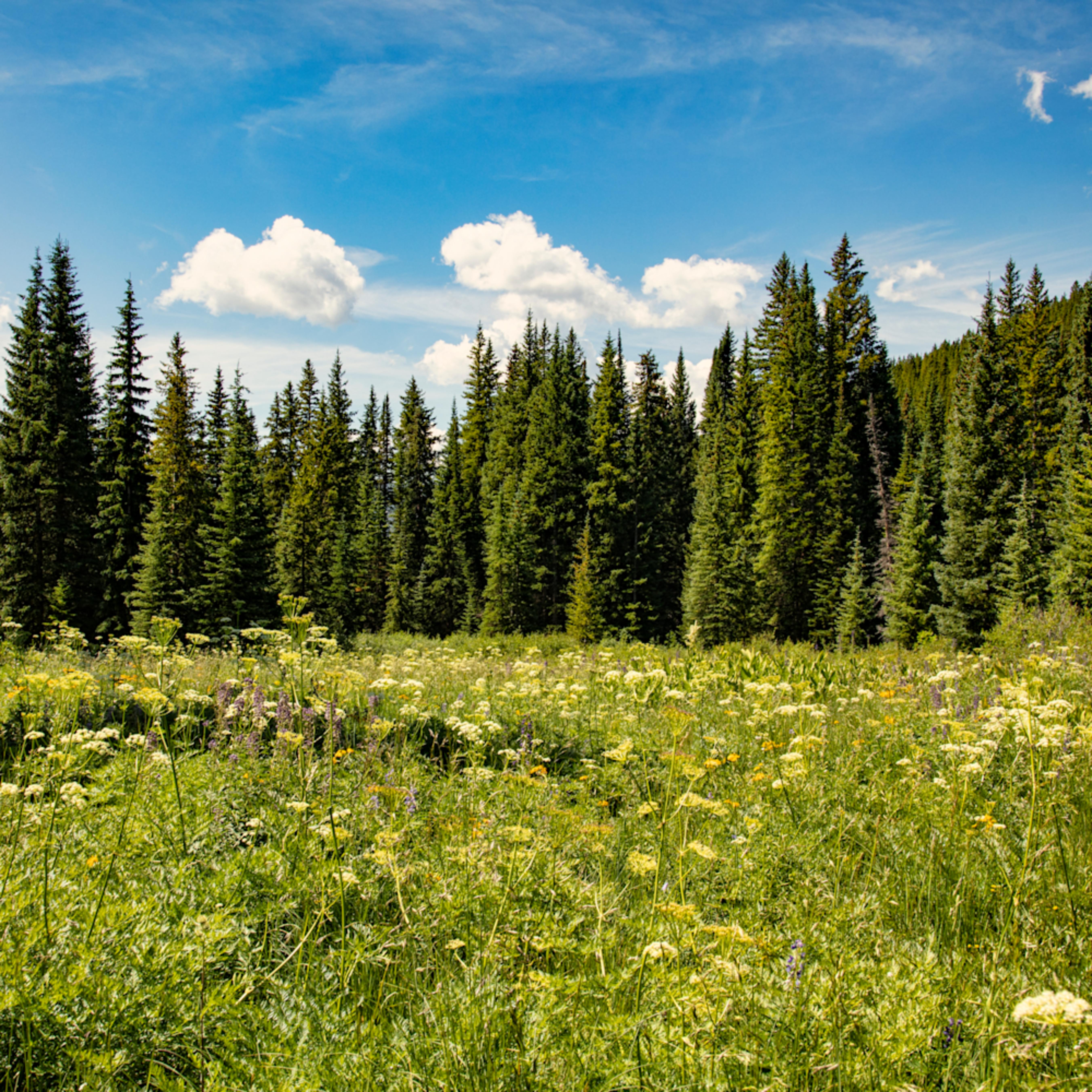 Snodgrass trail wildflowers 6886cfs m1npdq
