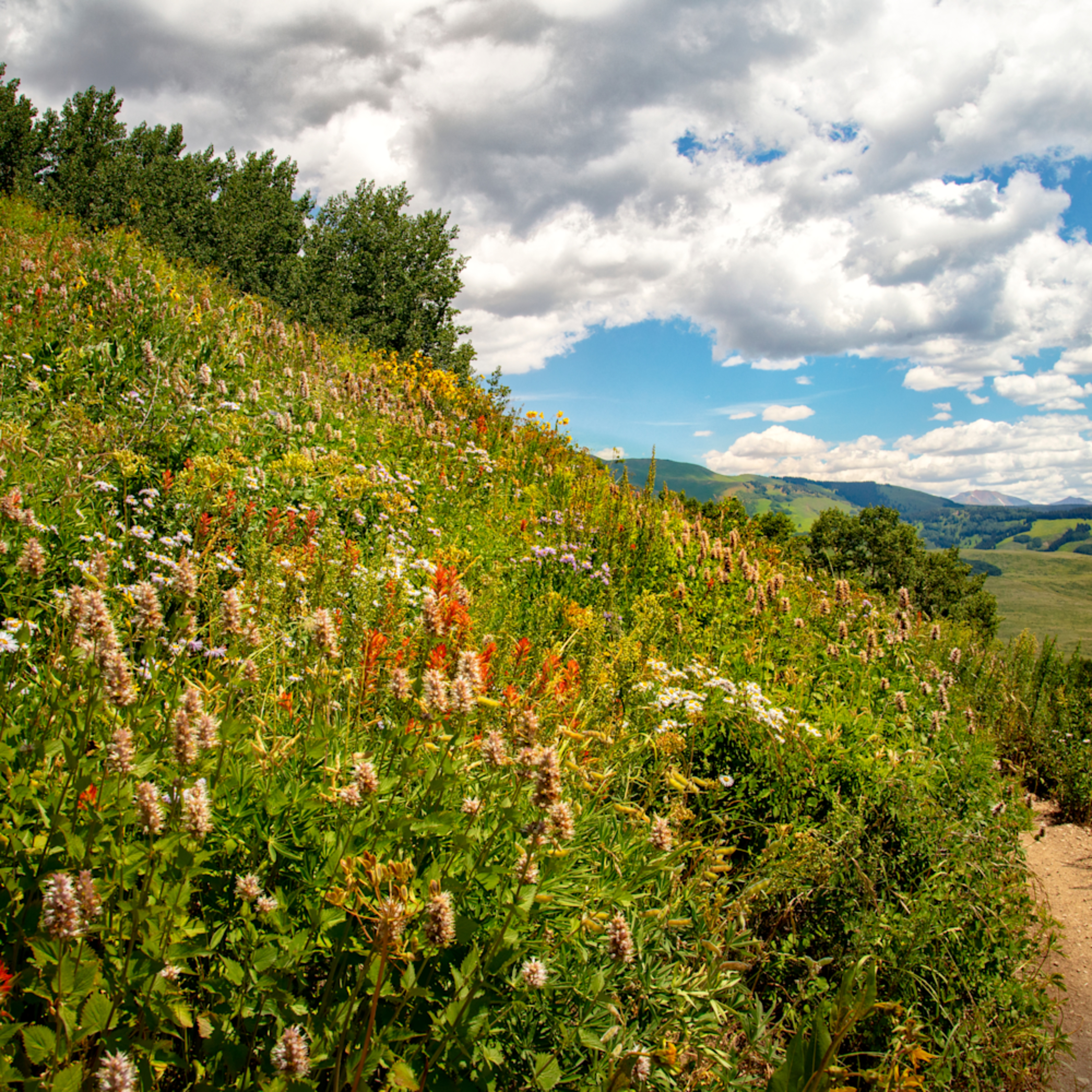 Snodgrass trail wildflowers mountains 7061 gfs c8xoba