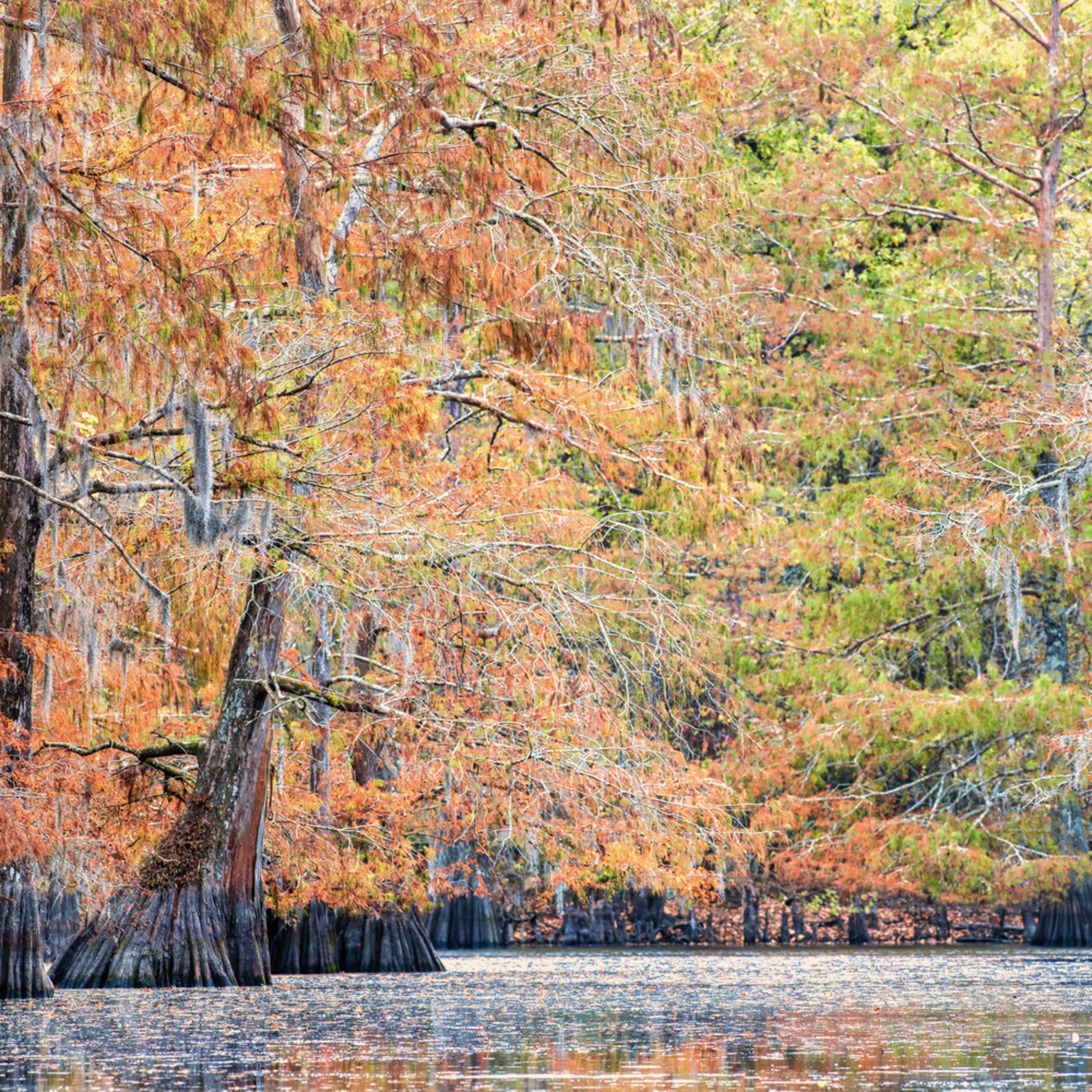 Andy crawford photography fall on 2 o clock bayou pxvwxw