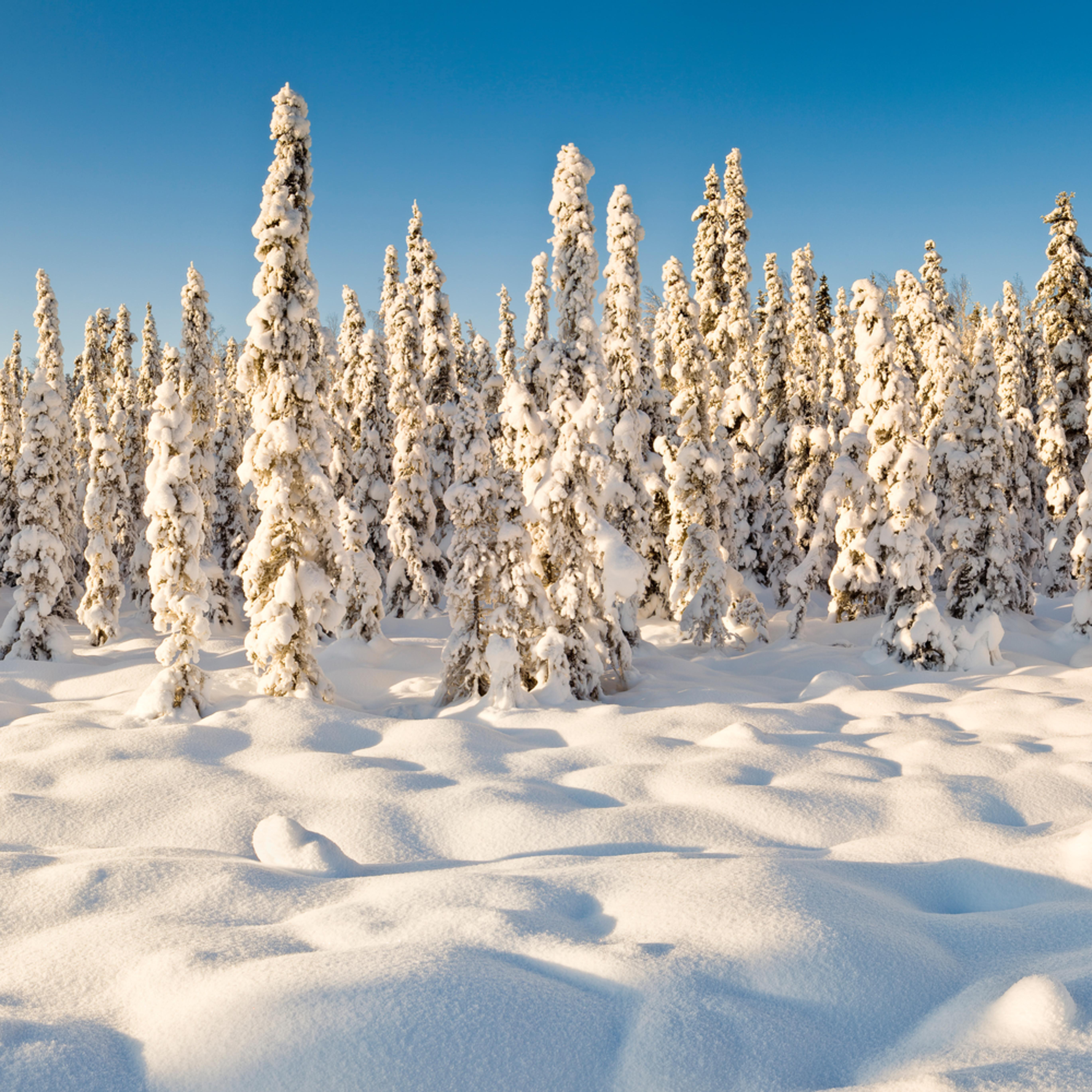 Chugiak winter pano1a artstorefronts edcvcx