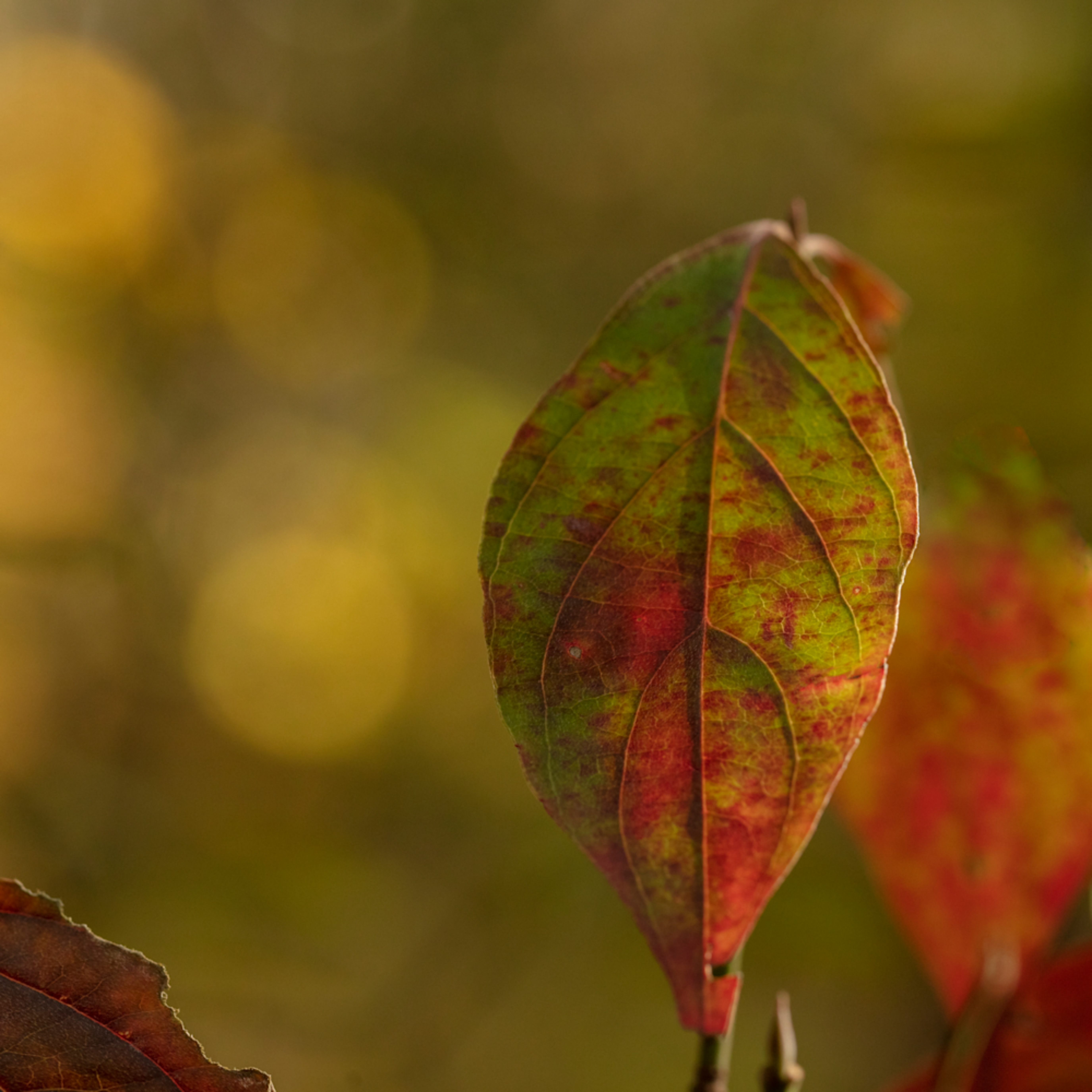 Dogwood leaf 0705fss healthcare art neu0k9