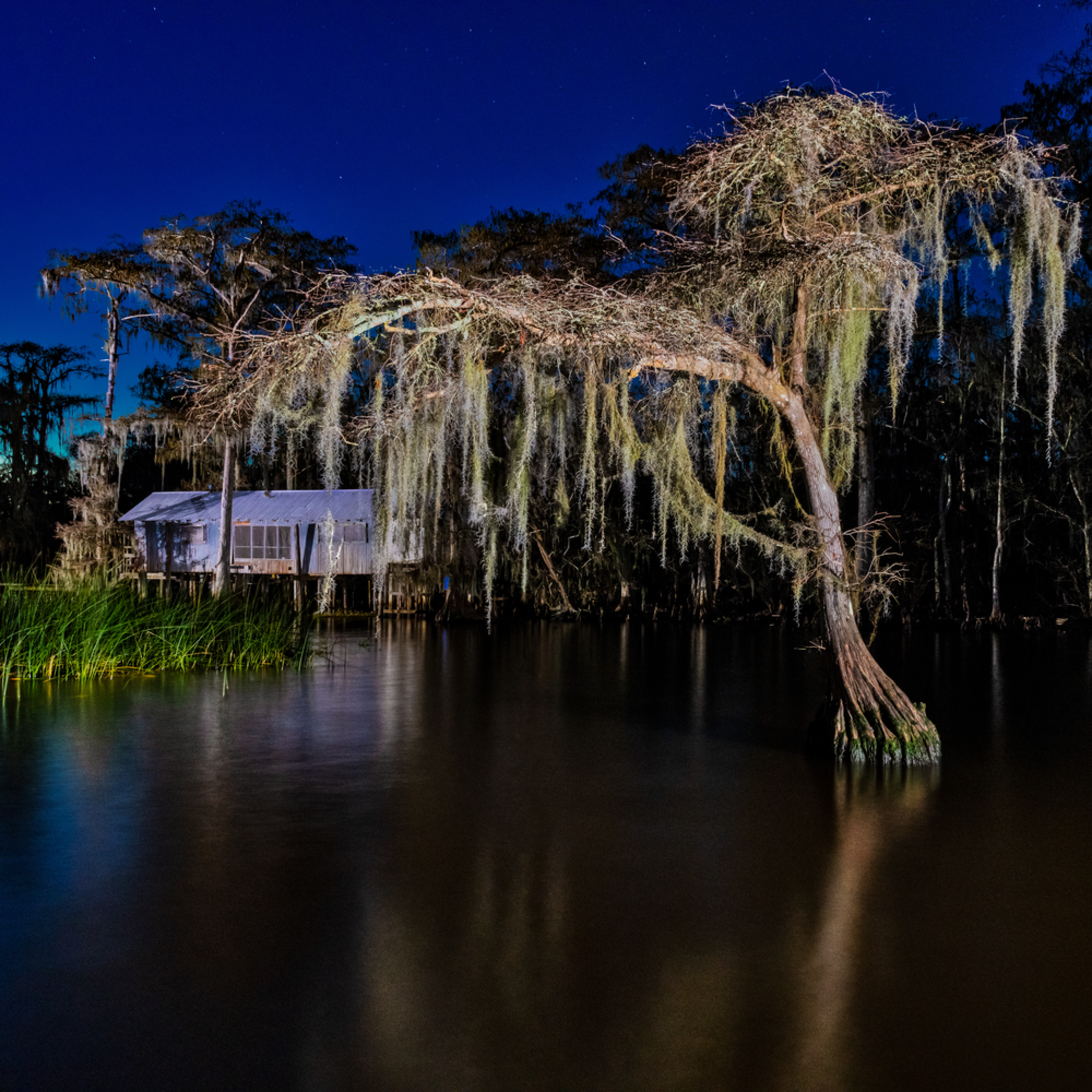 Andy crawford photography 190106 lake maurepas swamp 001 uucqpp