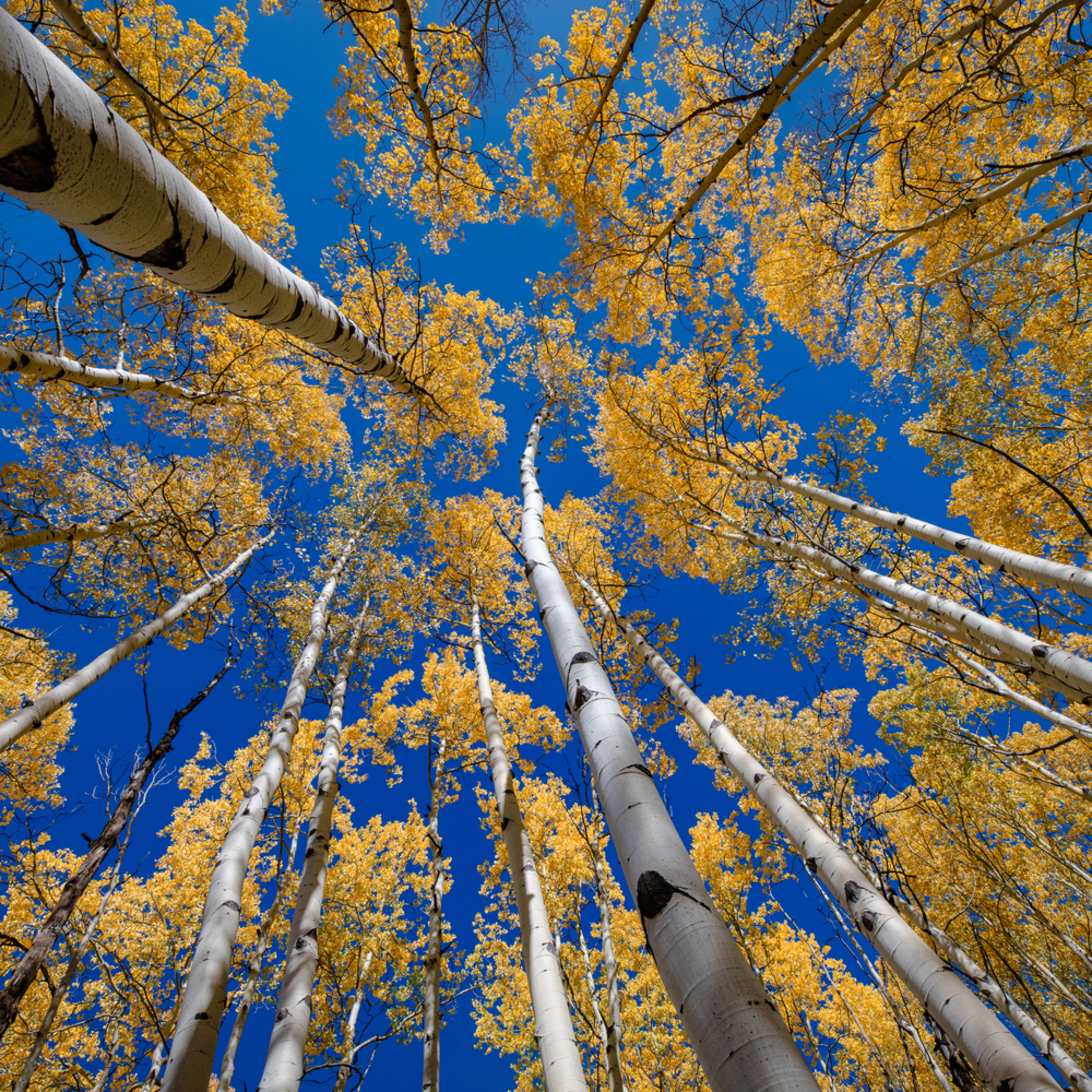 Andy crawford photography colorado aspens 8 yfav6b
