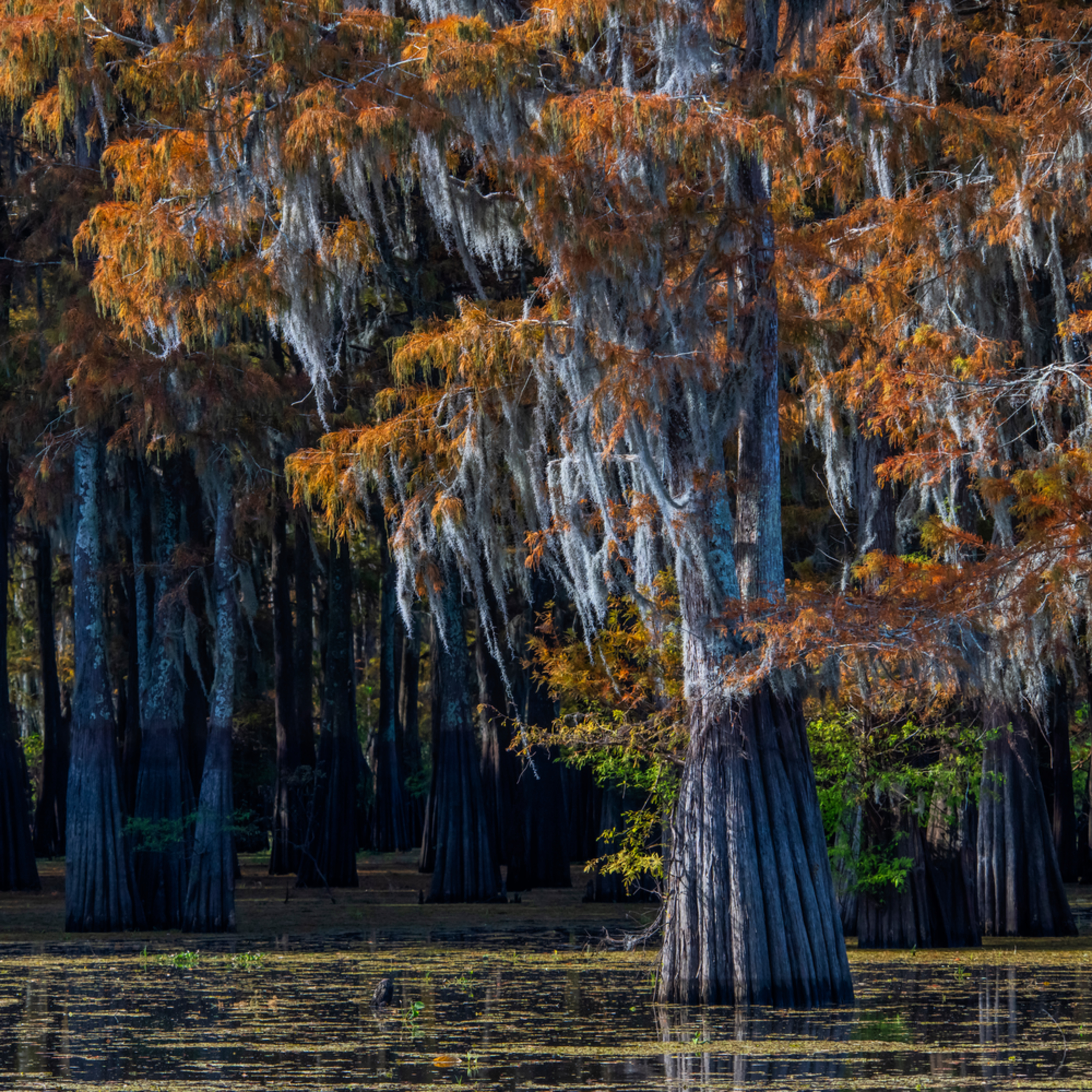 Andy crawford photography henderson swamp 1 kprwds