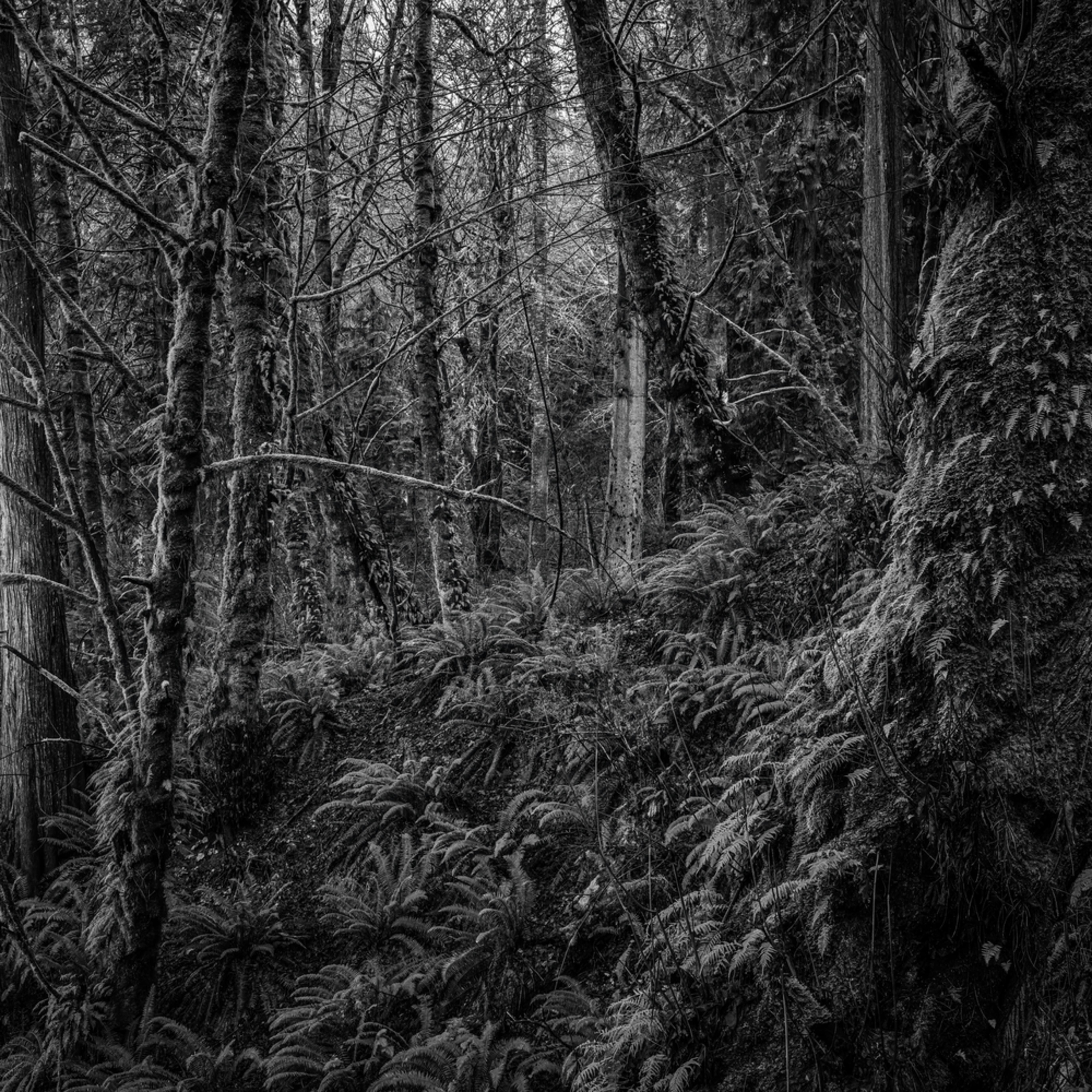 Forest kopachuck washington 2020 bgvqtw