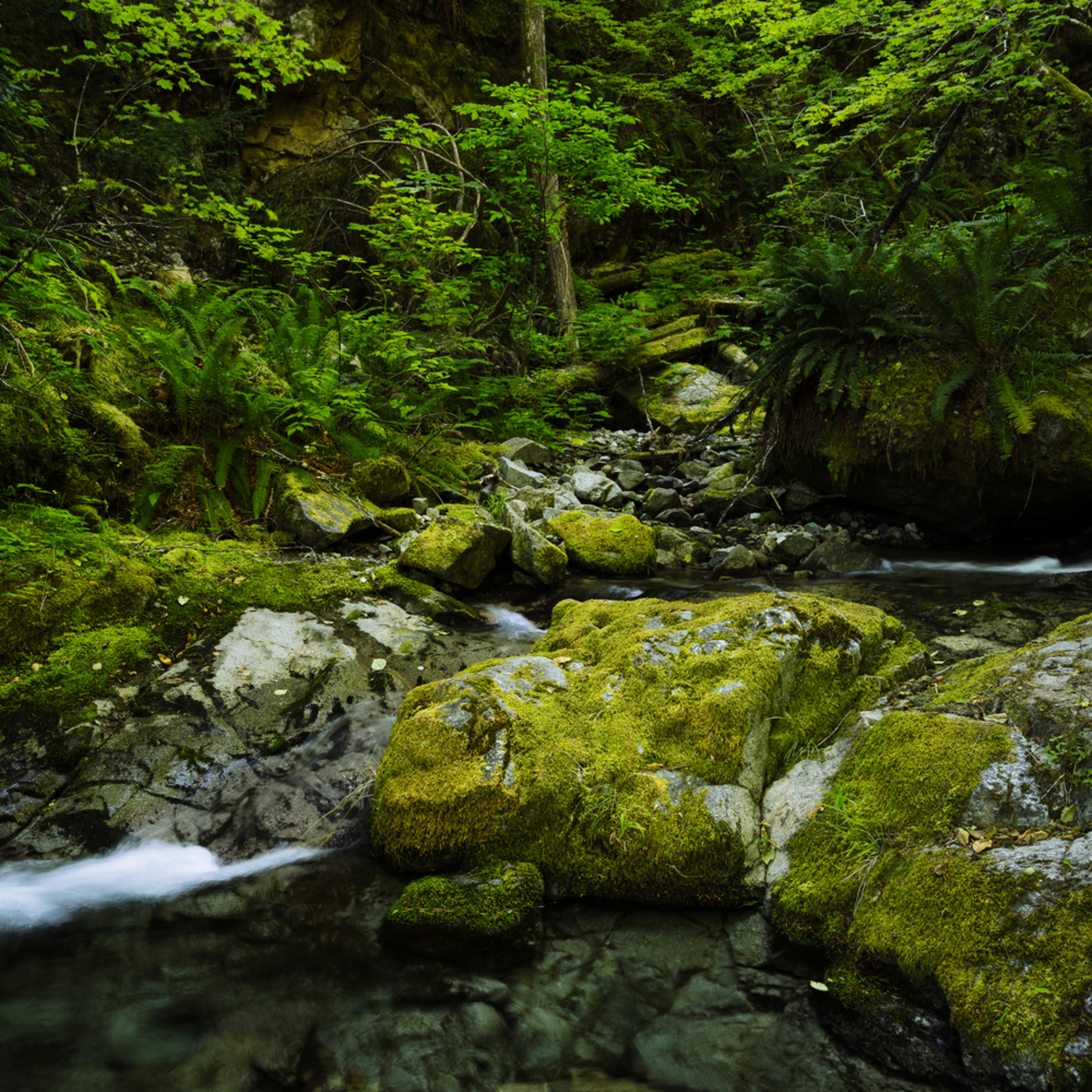 Galena creek washington 2020 b5nbll
