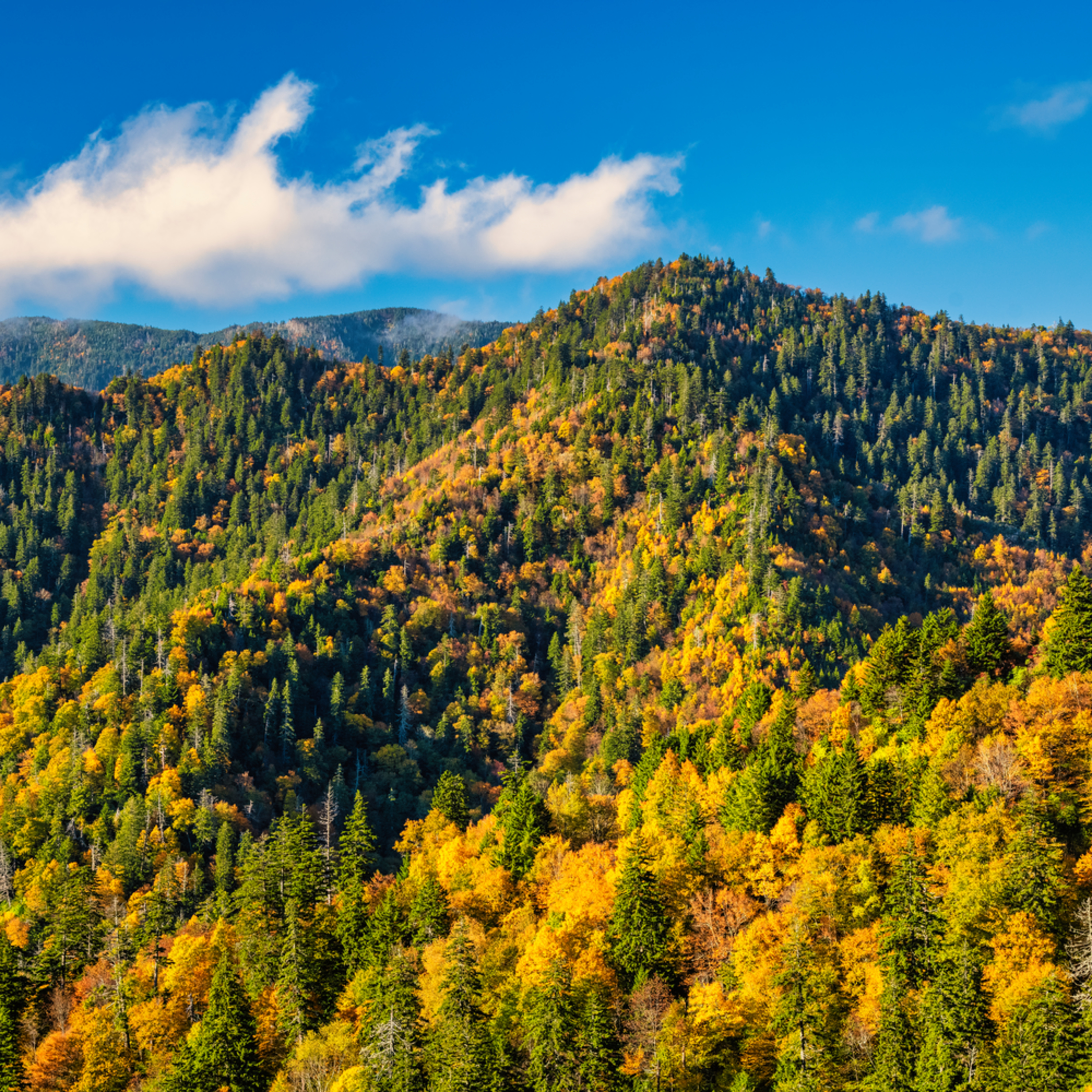 Andy crawford photography golden smokies 01 inqywm