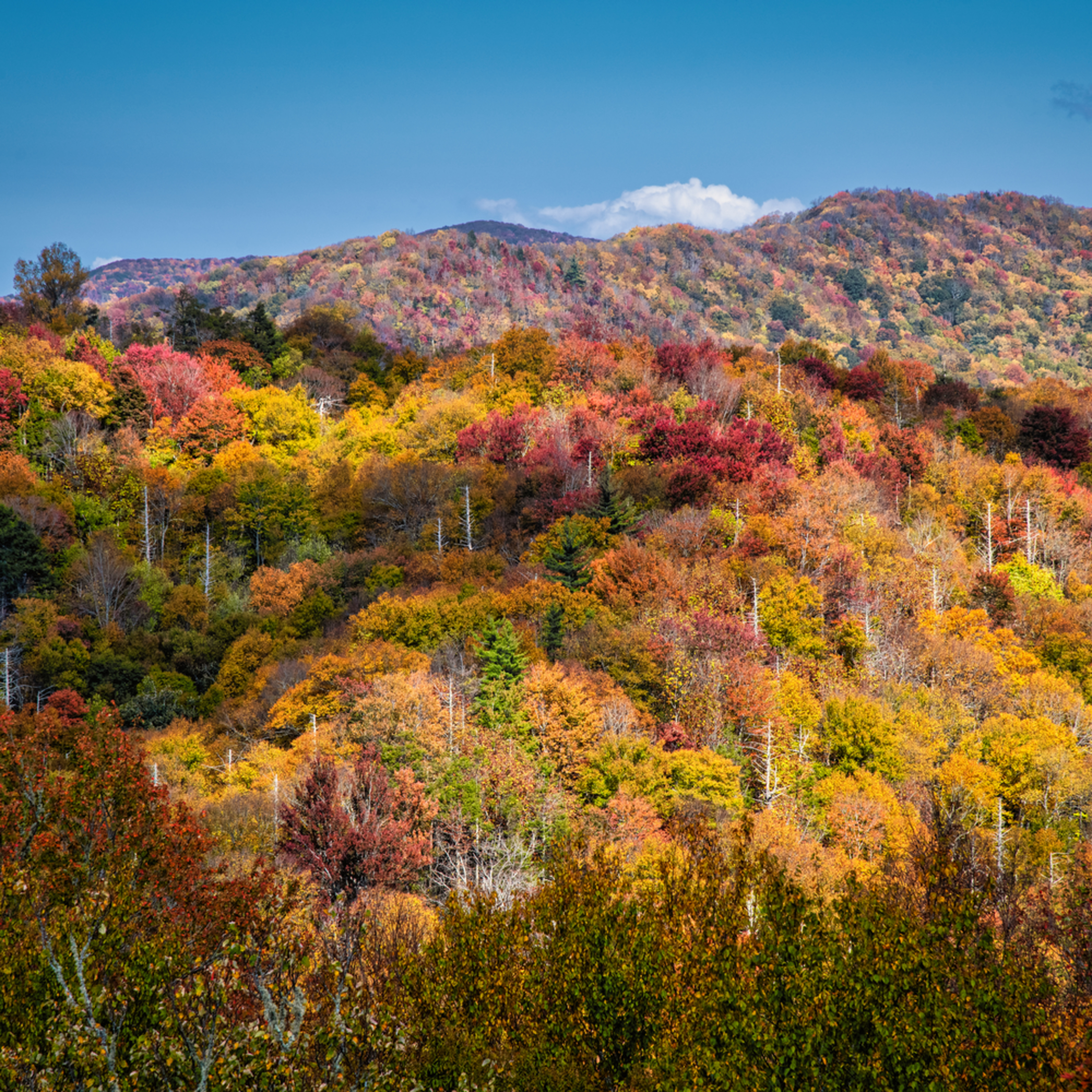 Andy crawford photography autumn tapestry rnjldv