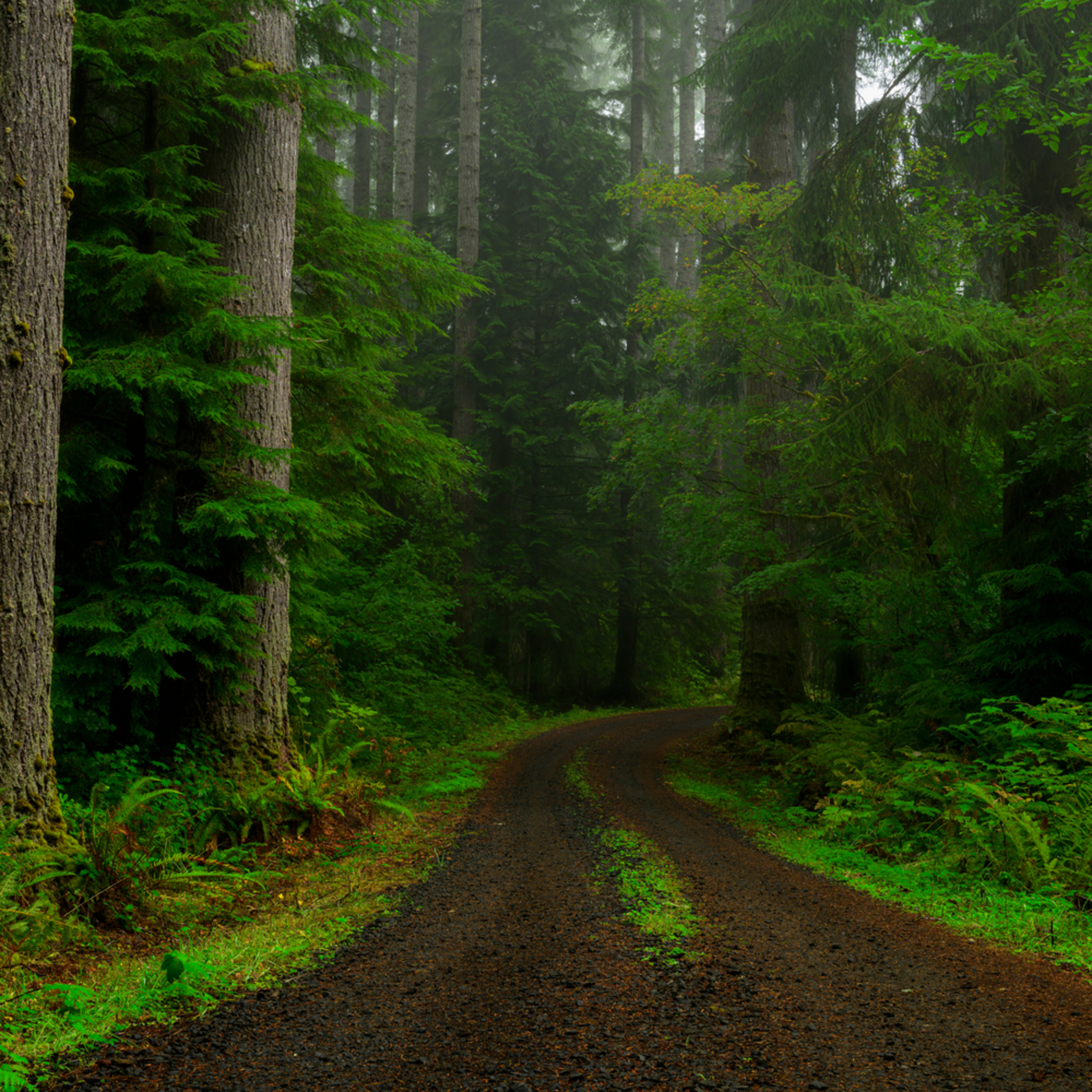 Forest road butte creek washington 2020 dwnjem