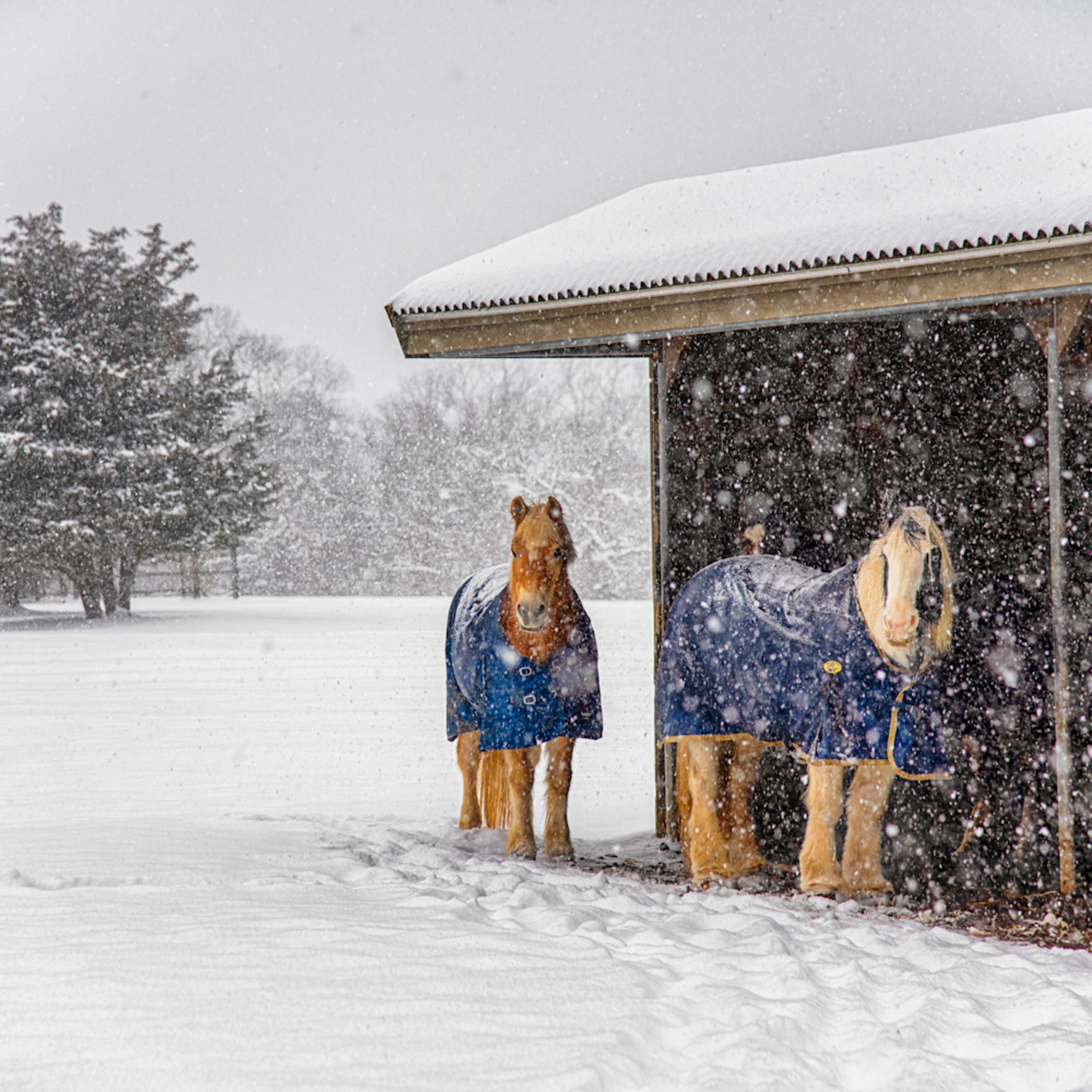 Misty meadows snow ponies ov8afr