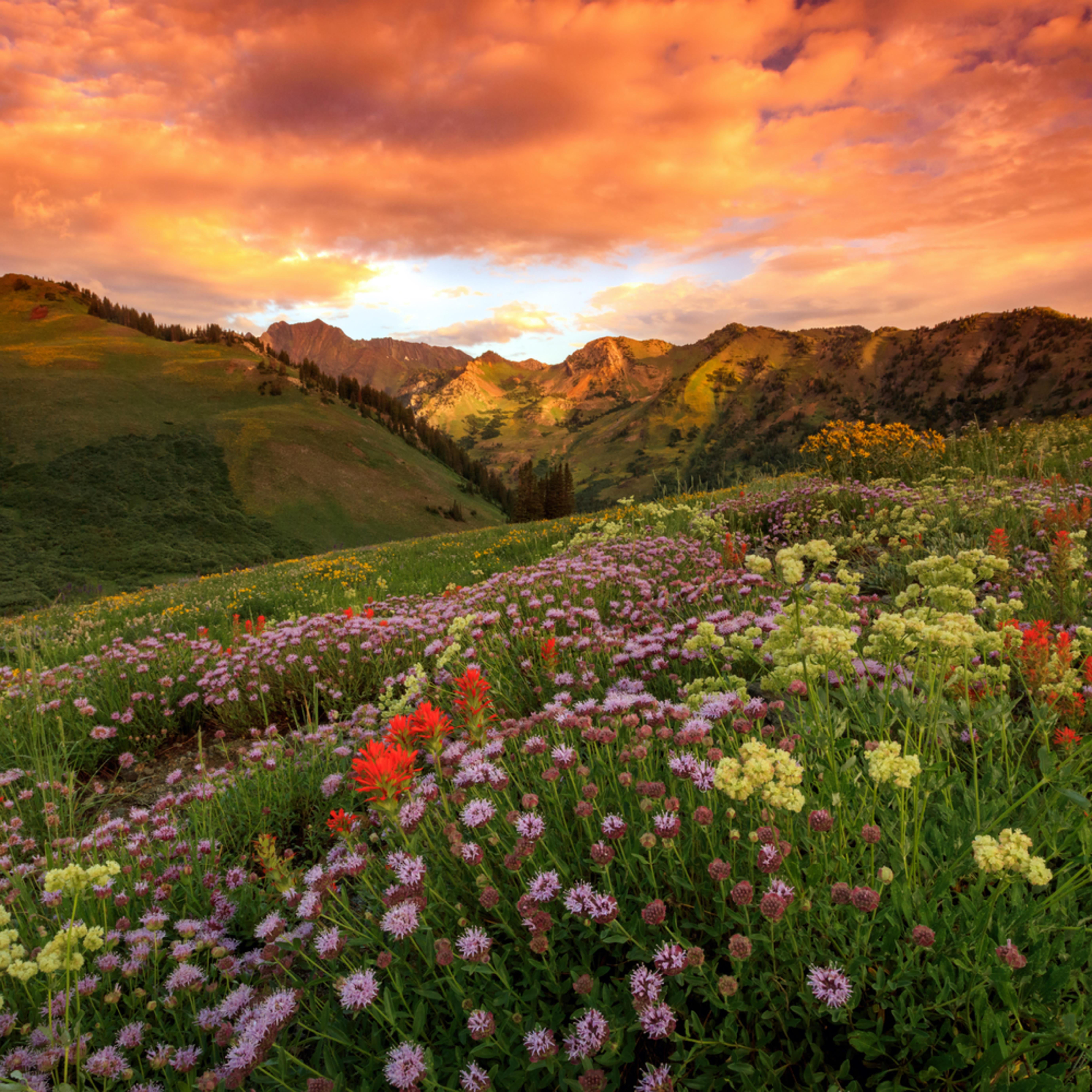 Albion basin golden sunrise hjpcyd