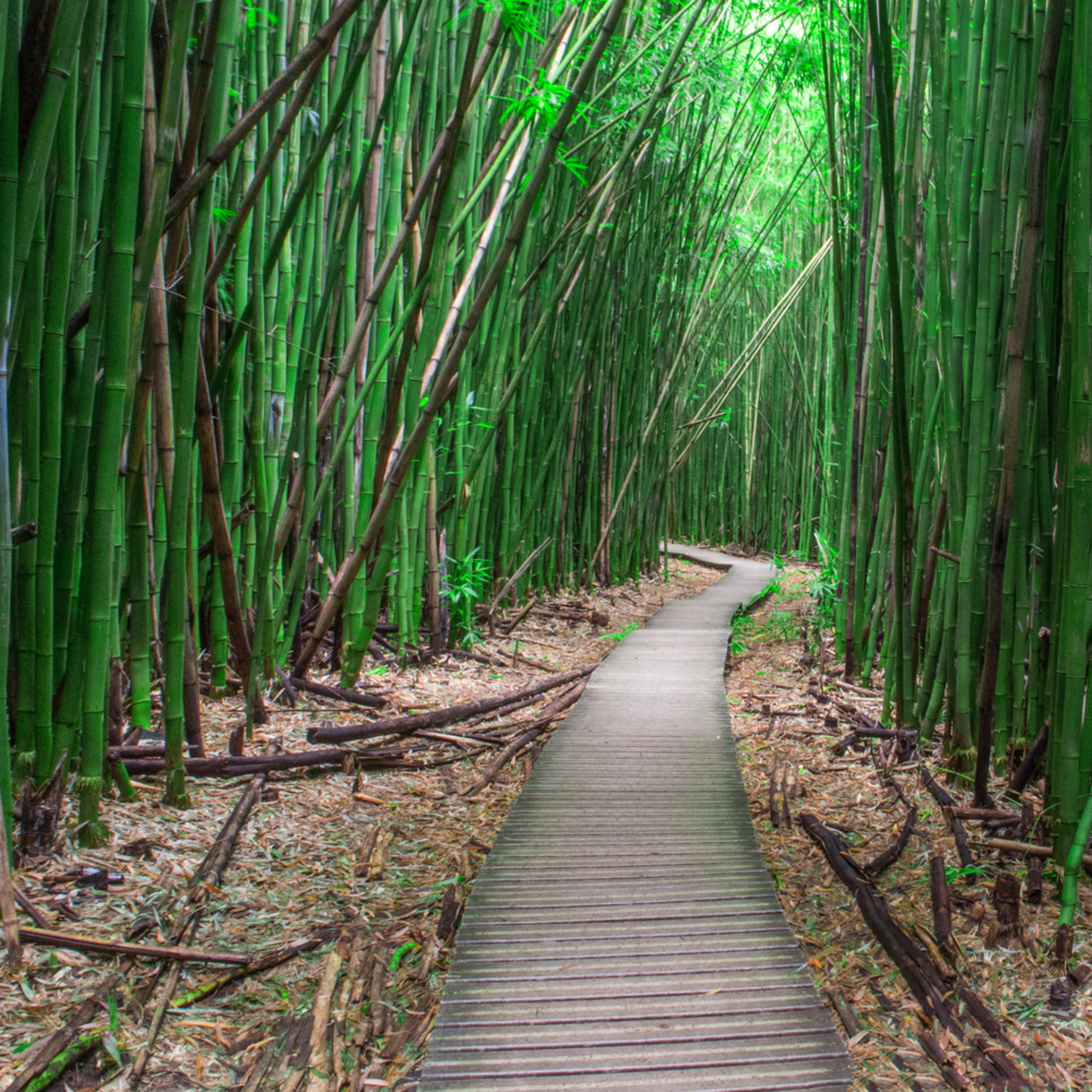 Bamboo forest 500px 18x48 300dpi jolfyi
