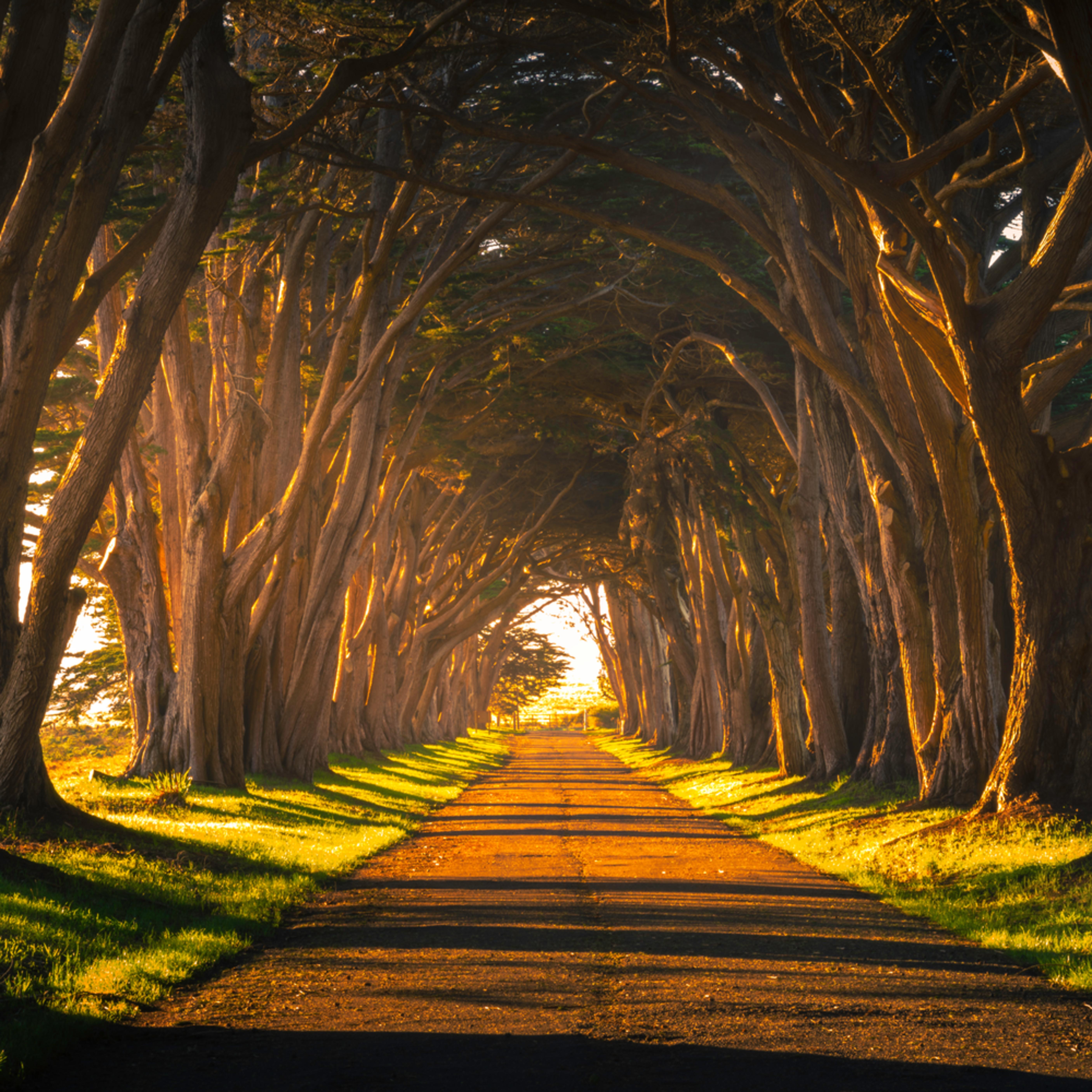 Cypress tree tunnel pano elfwec