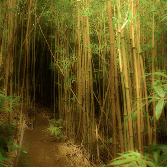 Pathway to spiritual enlightenment pqh6u5