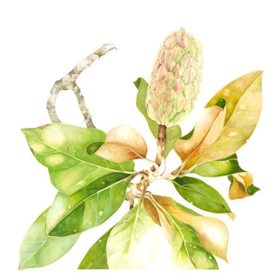 Goehring magnolia sm m5j7sg