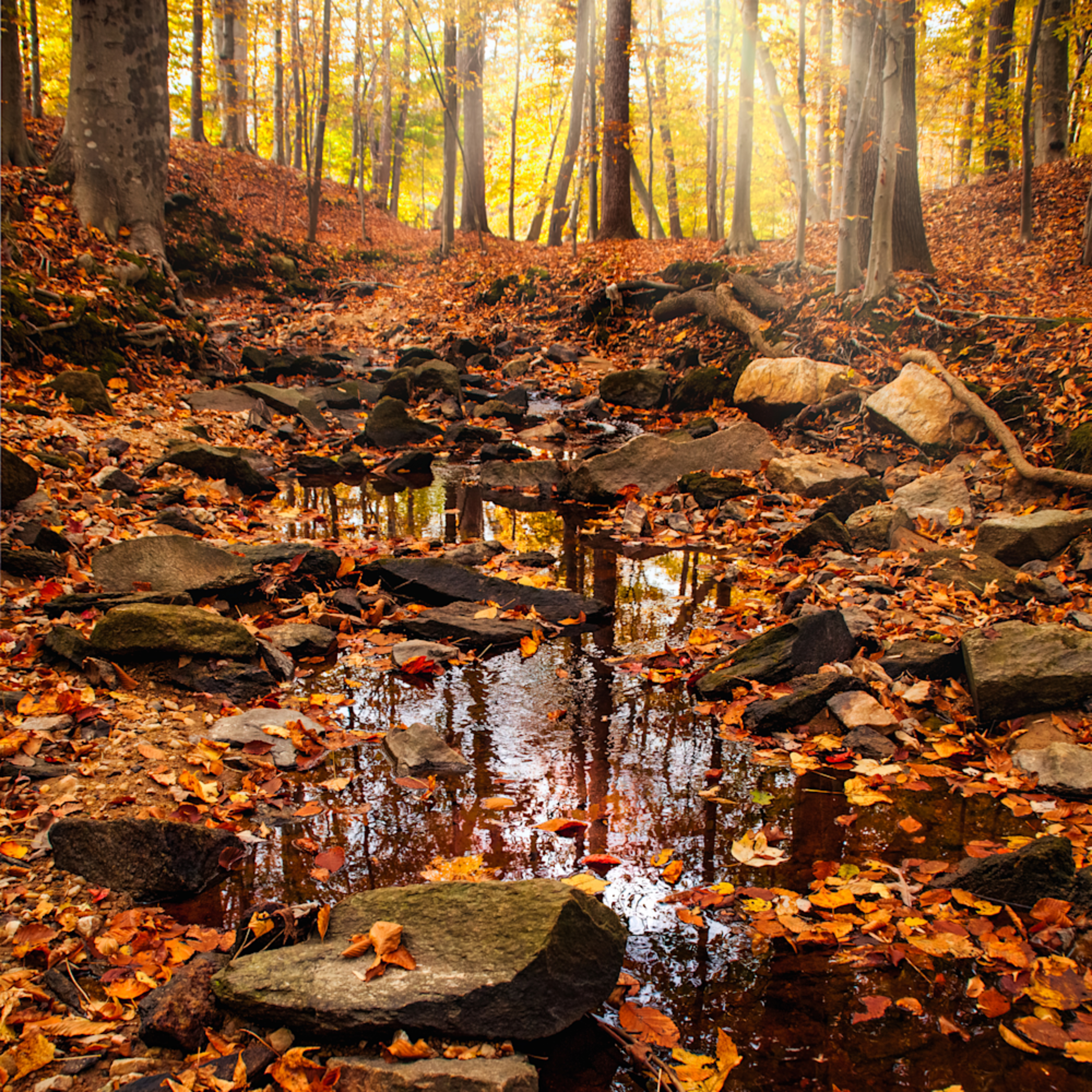 Sunrays over a forest stream ojivff