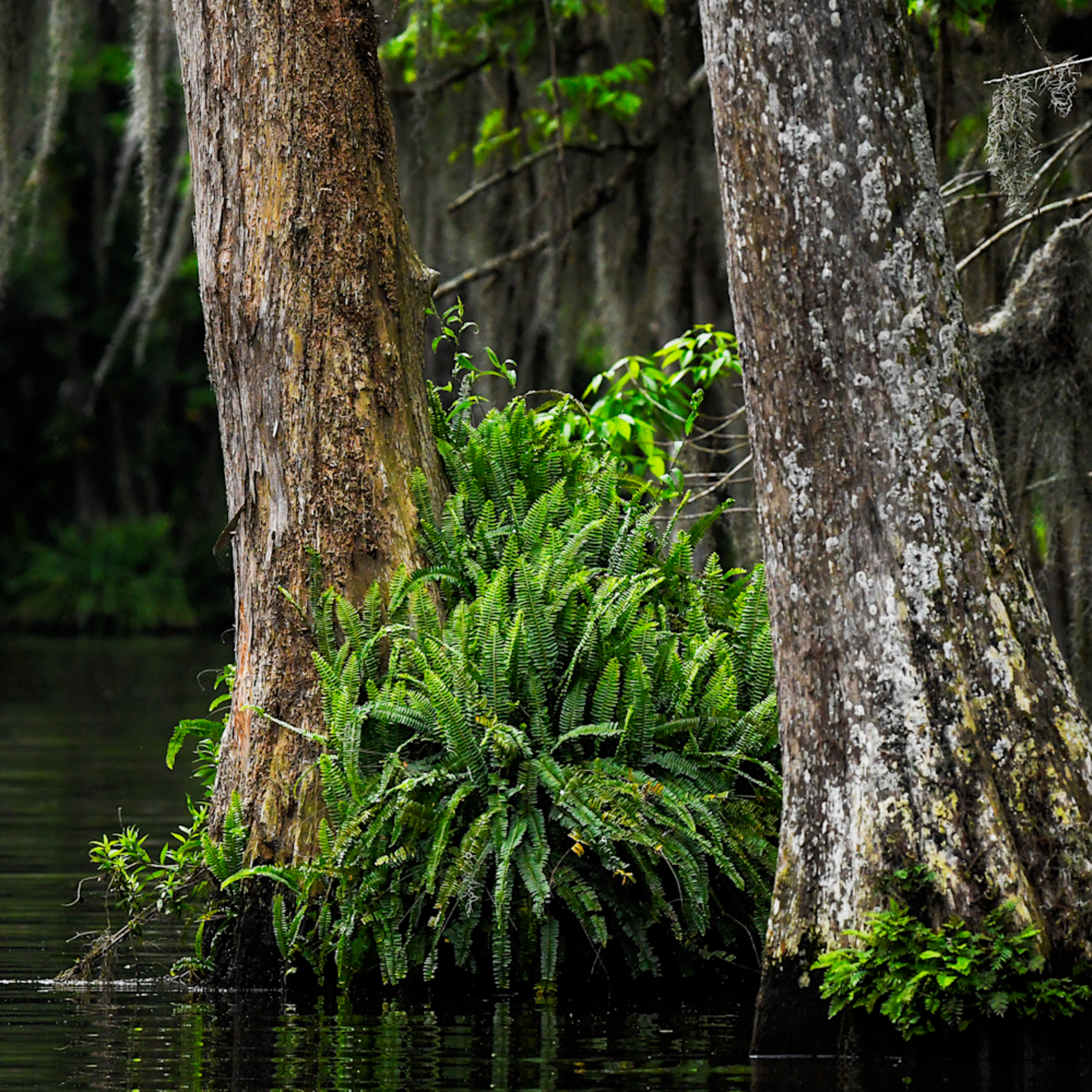 Andy crawford photography lost in the florida swamp at7fie