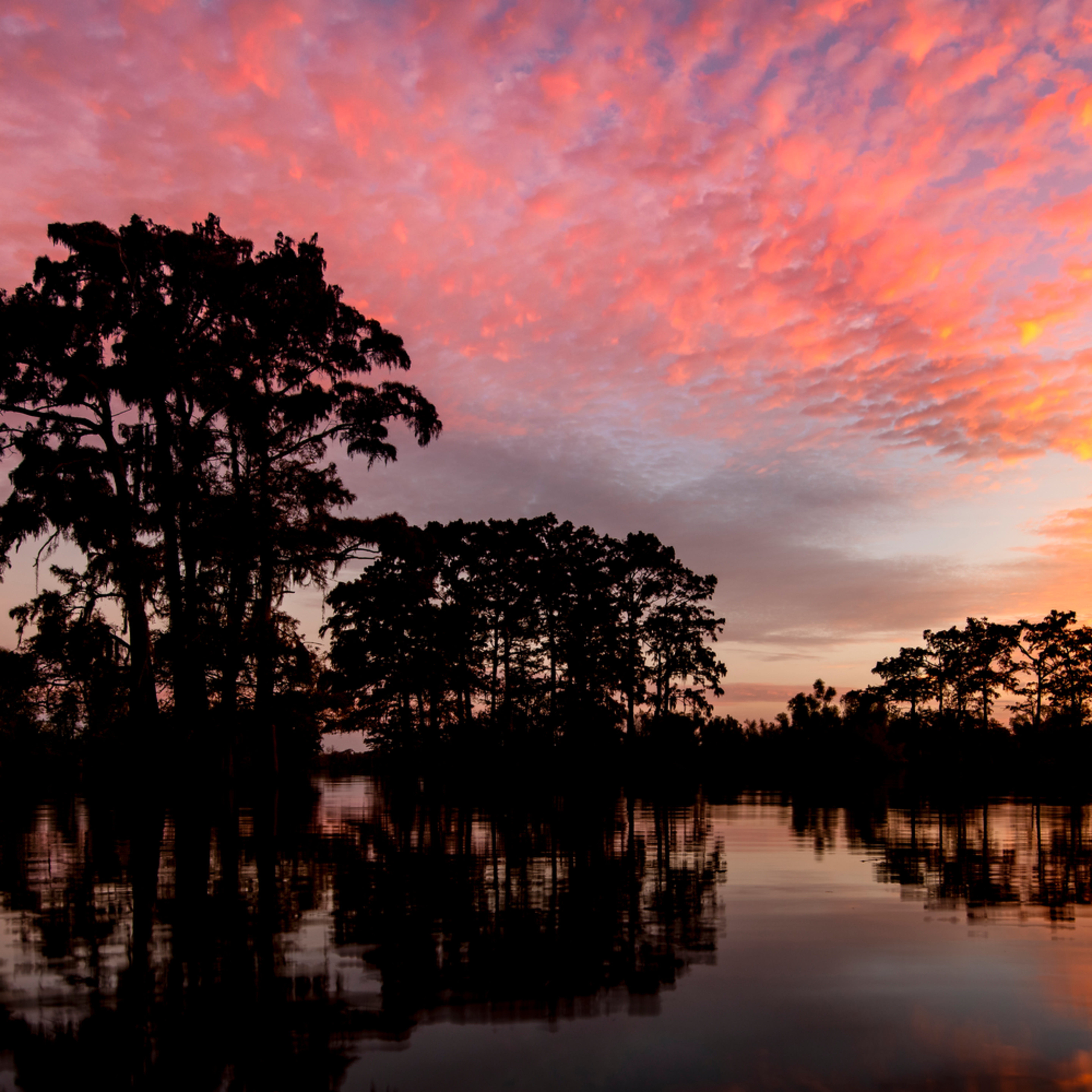 Andy crawford photography henderson swamp 2 a83x28